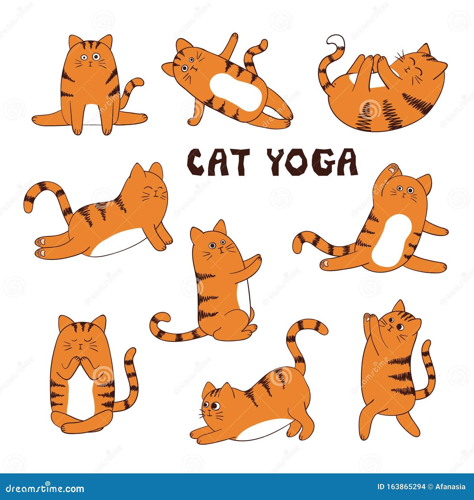 Set Of Cartoon Funny Yoga Cat Animal Sport Stock Vector Illustration Of Yoga Gymnastics 163865294