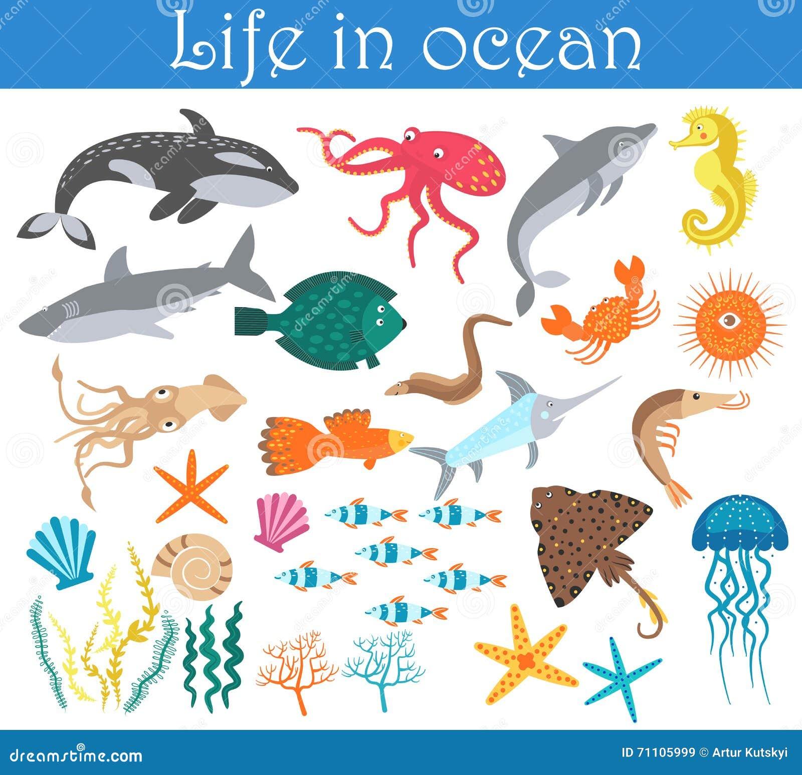 List of Fish Species -- Fish Photos