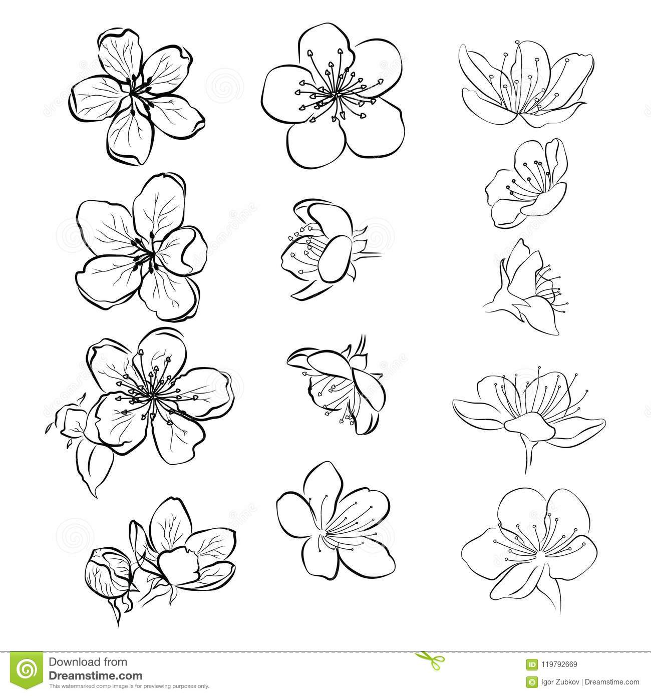 Set Of Cherry Blossoms Collection Of Flowers Of Sakura Black And