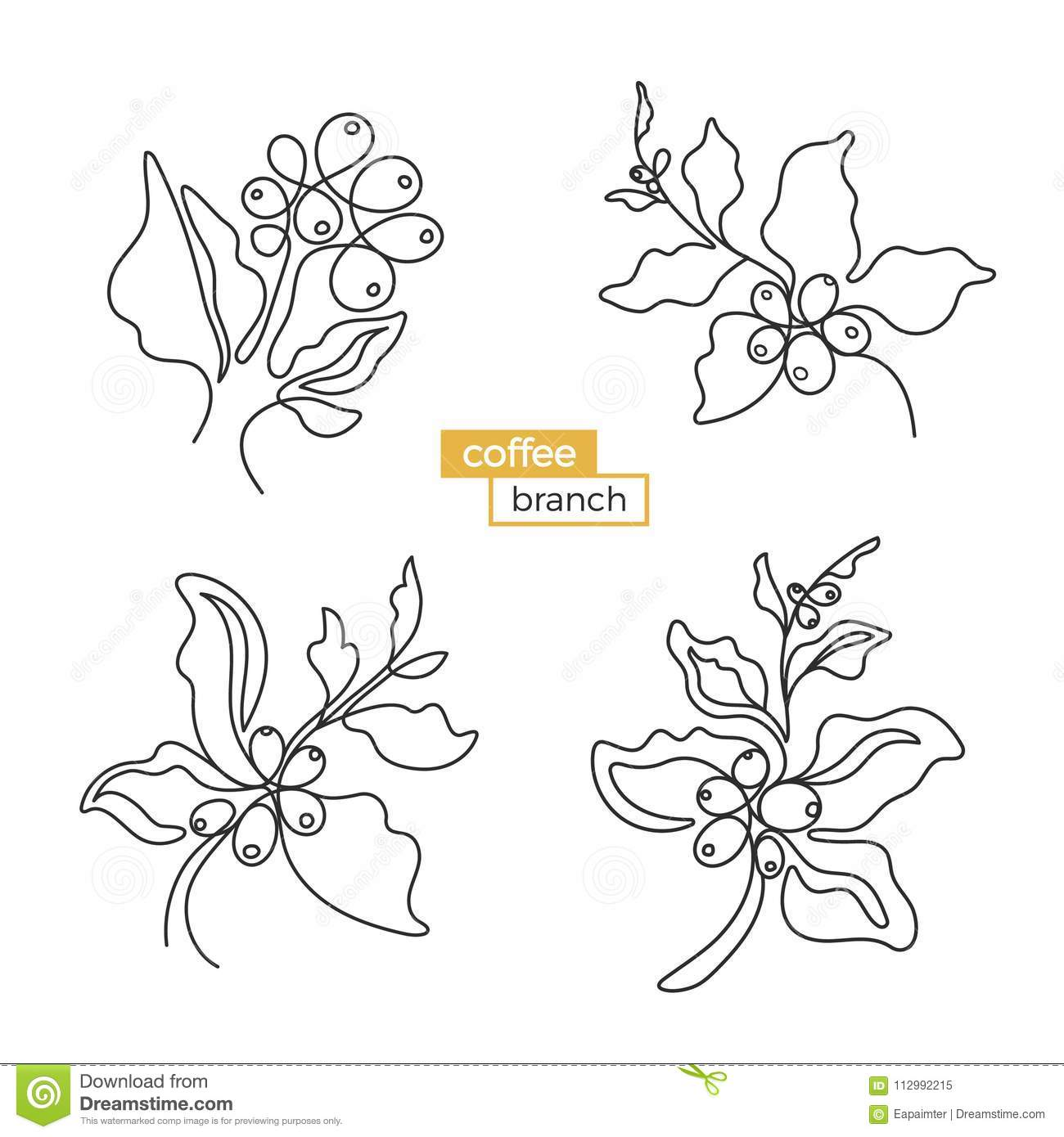 Set of branches of coffee tree. Vector