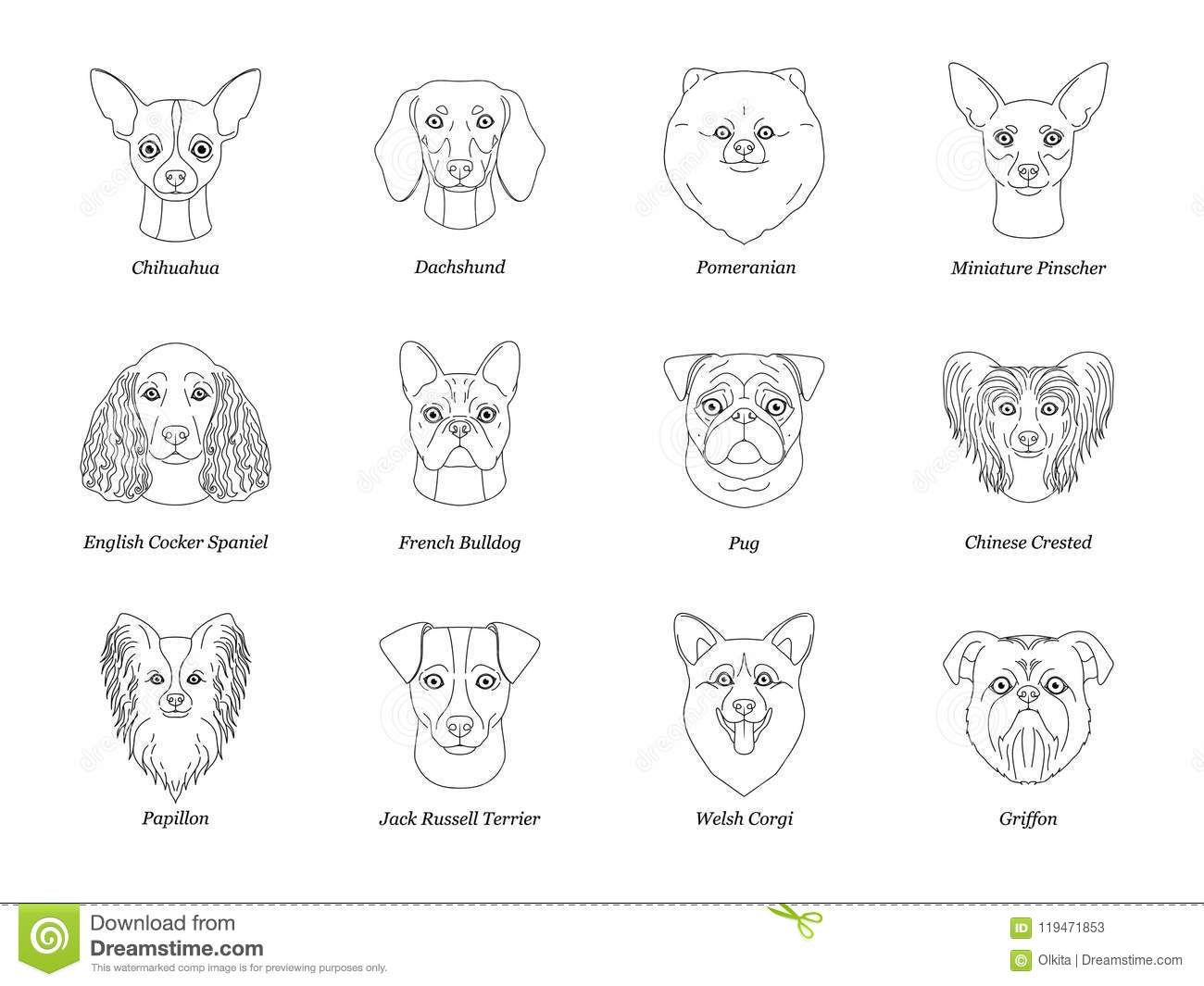 Set, collection of isolated black outline head of chihuahua dachshund, papillon, spitz, pug, miniature pinscher welsh corgi french