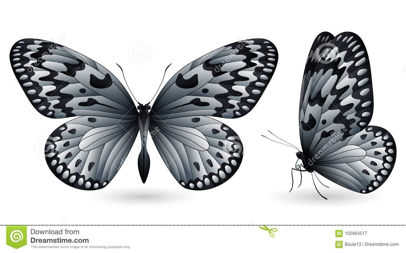 Set Of Colorful Butterflies. Front And Side View Stock Illustration ...