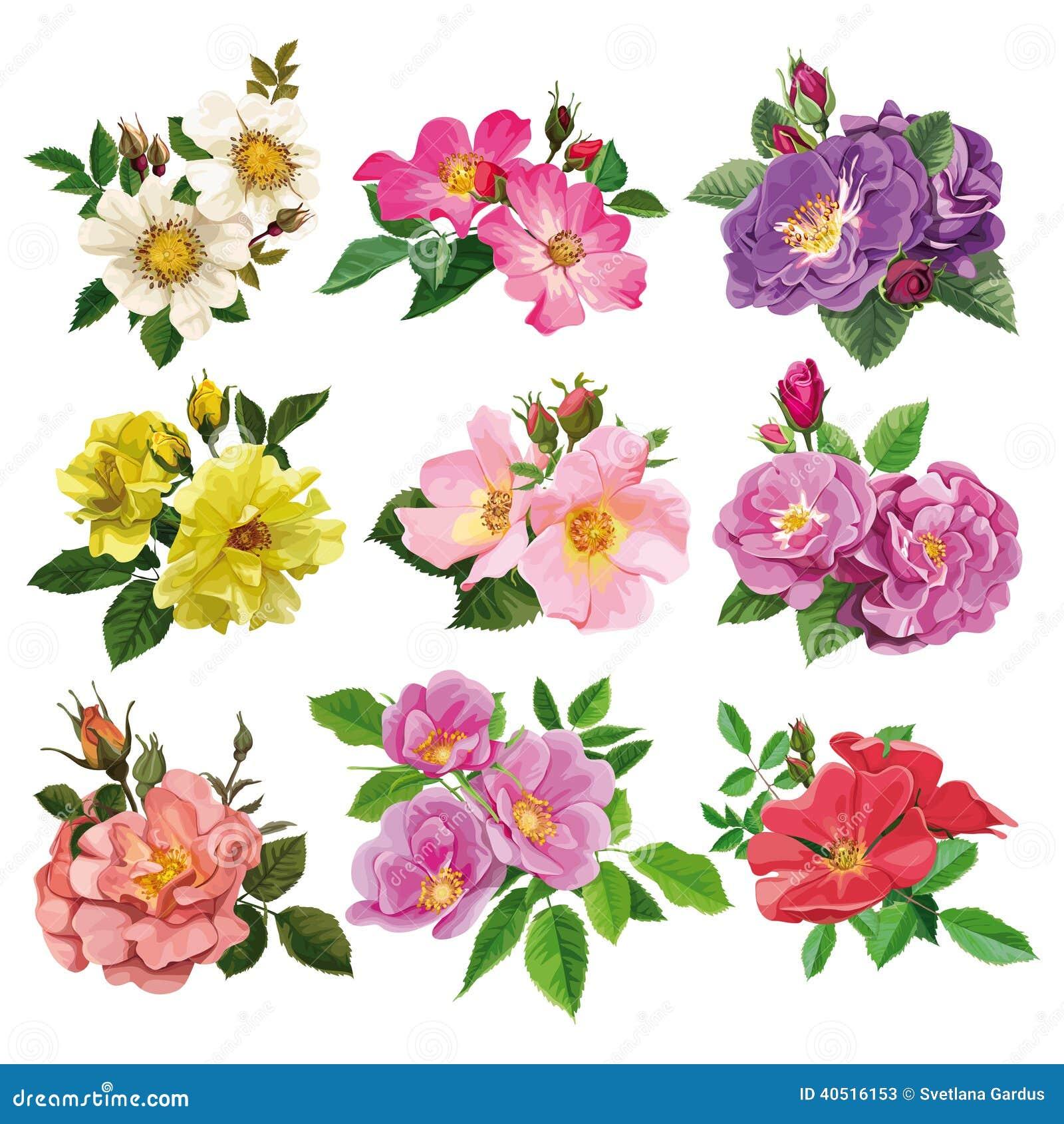 Wild rose color