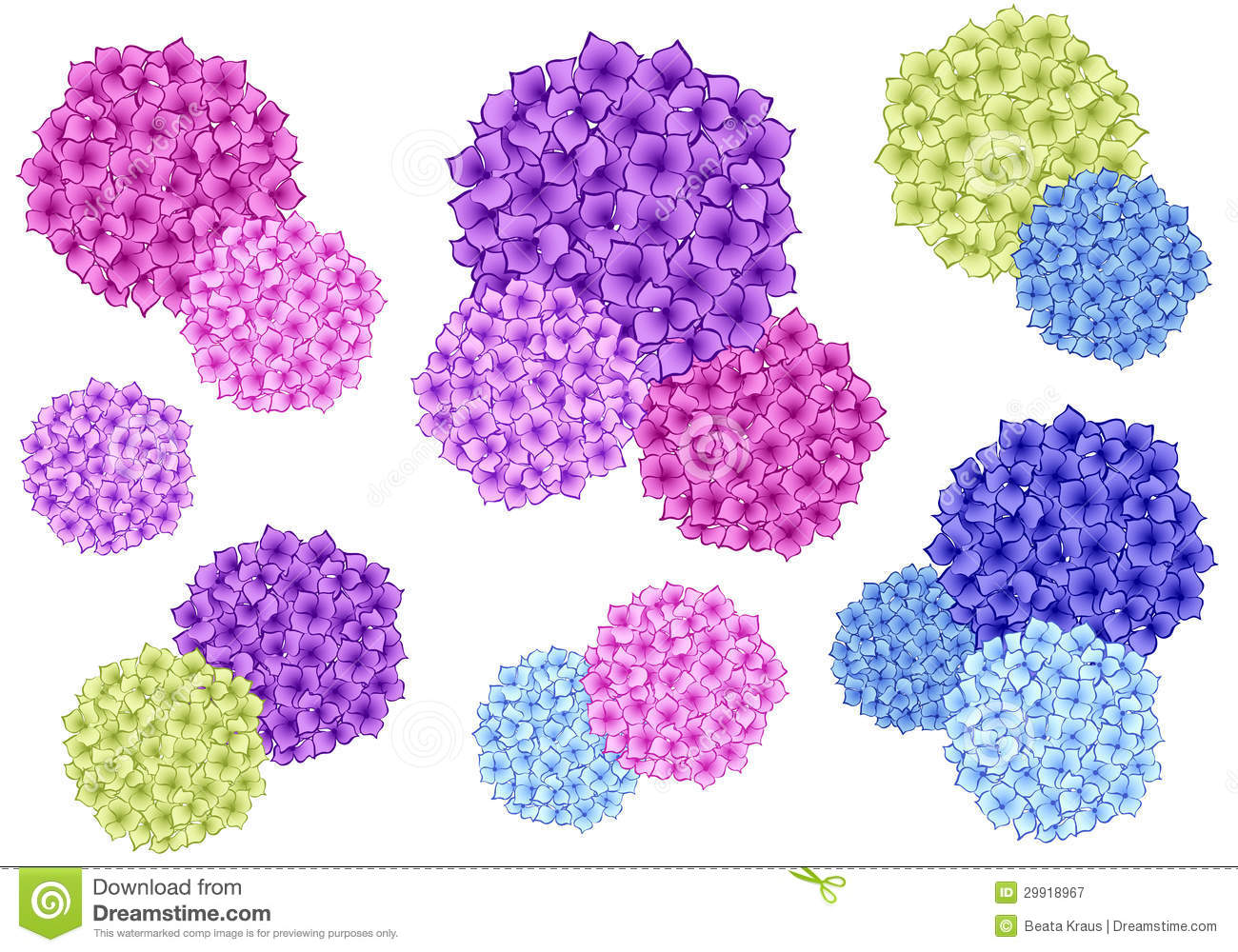 Lilac Flower Meaning Colorful Hydrangea Flowers Vector Set Royalty Free Stock
