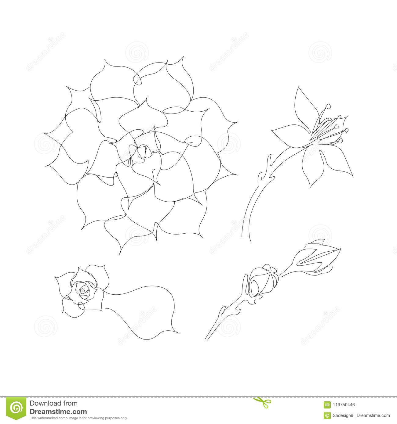 Set Of Continuous Line Succulents Blossoming Echeveria Beautiful Succulent Flower Stock Vector Illustration Of Echeveria Adults 119750446