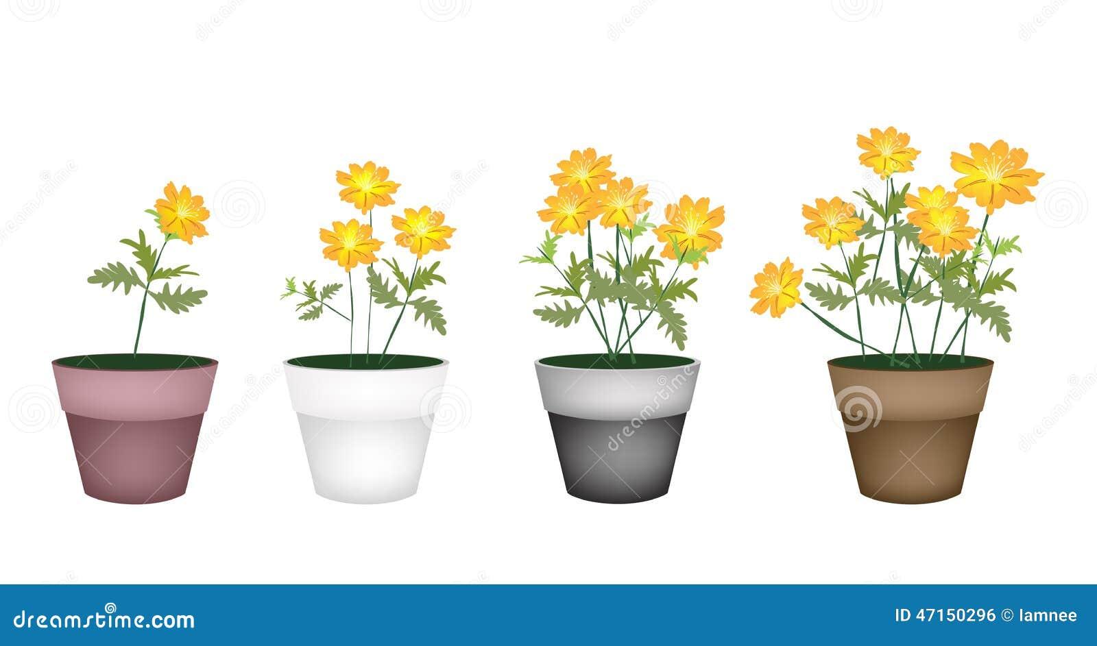 Set Of Cosmos Flowers In Flower Pot Stock Vector