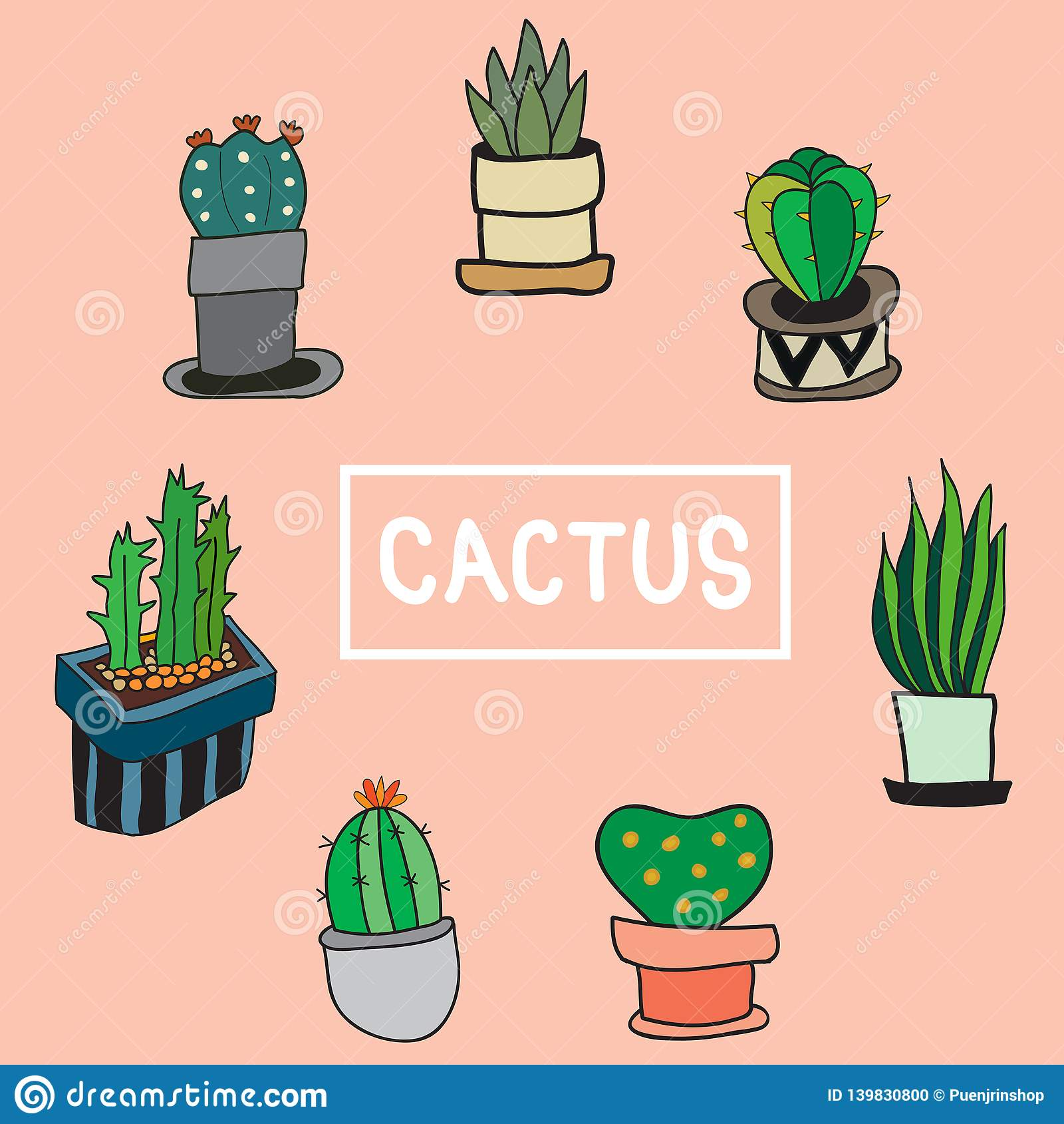 Set of cute cactus and the other plants in pot