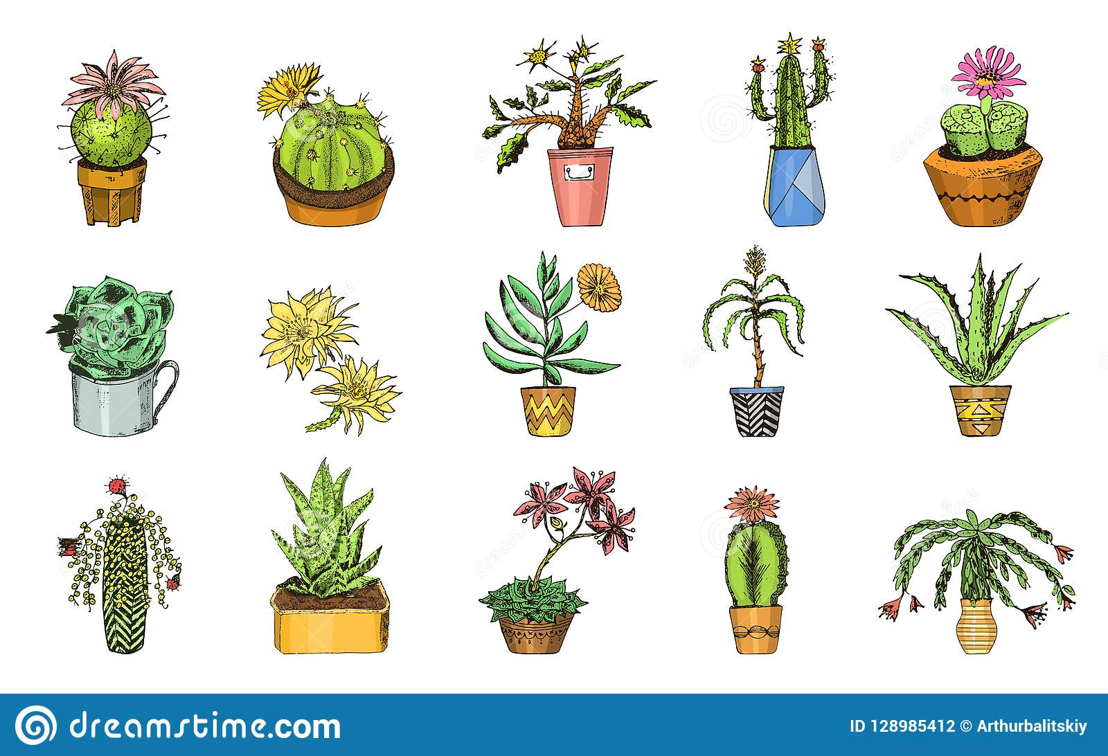 Set Of Cute Cactus And Succulents For Cards Stickers For Girls Mexican Houseplants Kawaii Cacti Engraved Hand Drawn Stock Vector Illustration Of Home Background 128985412