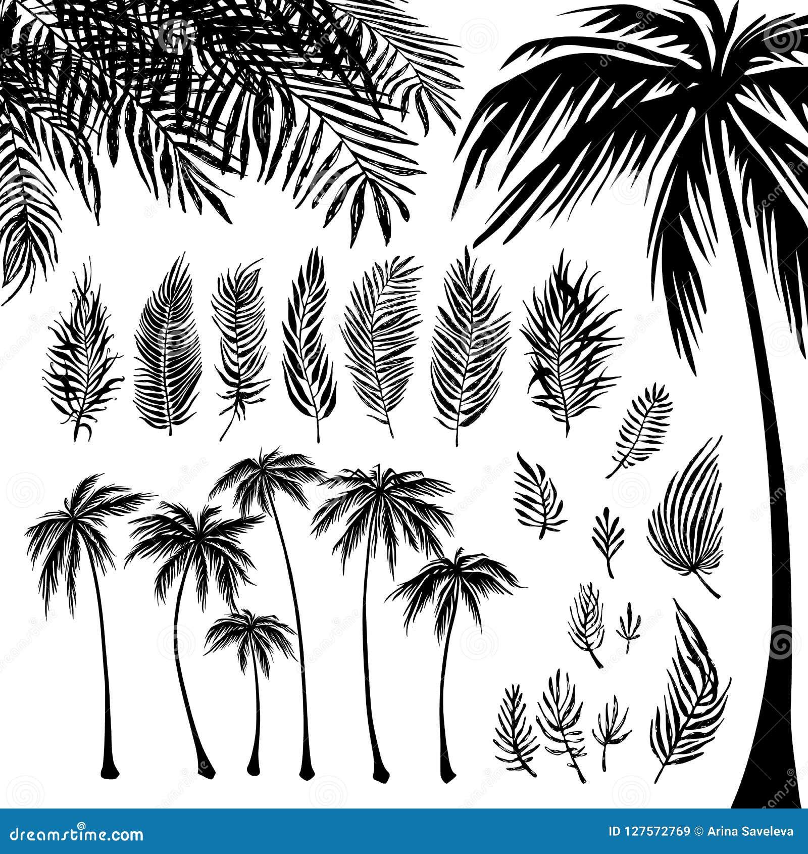 Set czarne drzewko palmowe gałąź na białym tle i sylwetka Wektorowa ilustracja, projekta element dla