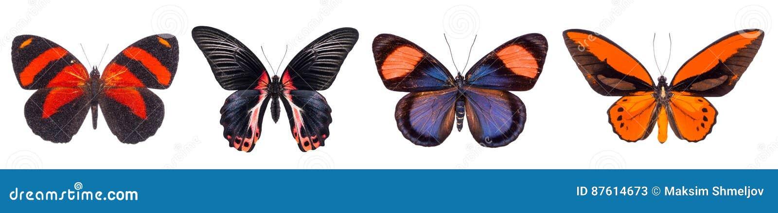 Set cztery kolorowy i piękni motyle