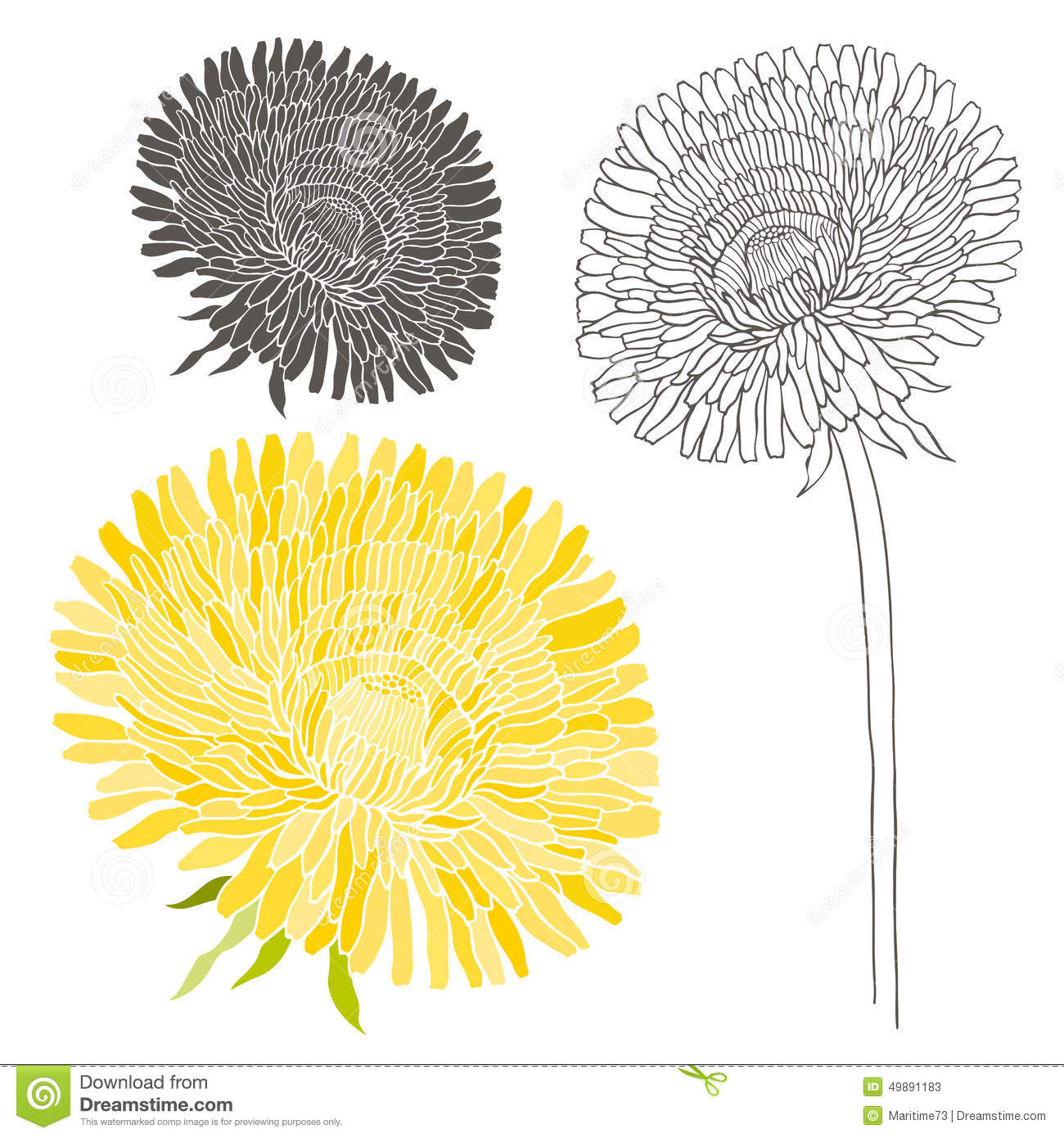 set of dandelion isolated on white background hand drawn