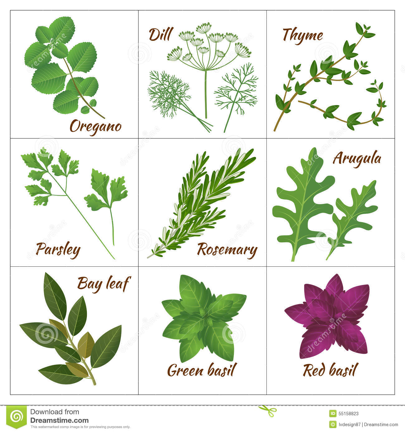 Set of different culinary herbs or medicinal, curative aromatic herbs ...