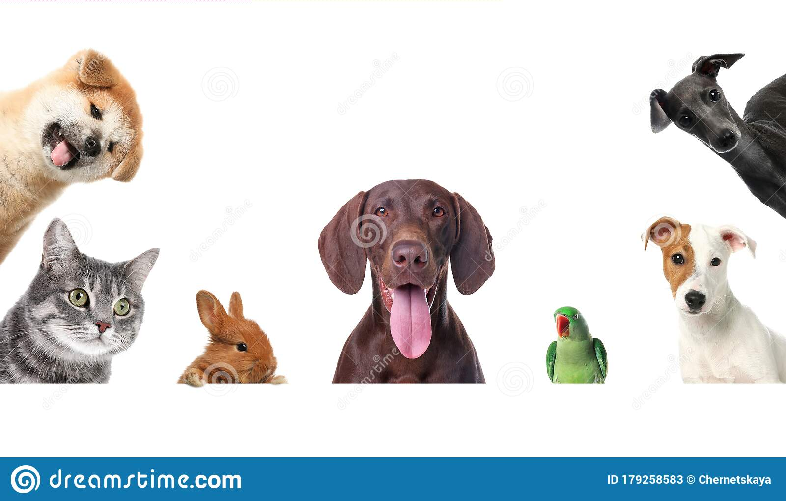 Set With Different Cute Pets On Background Banner Design Stock Image Image Of Care Funny 179258583
