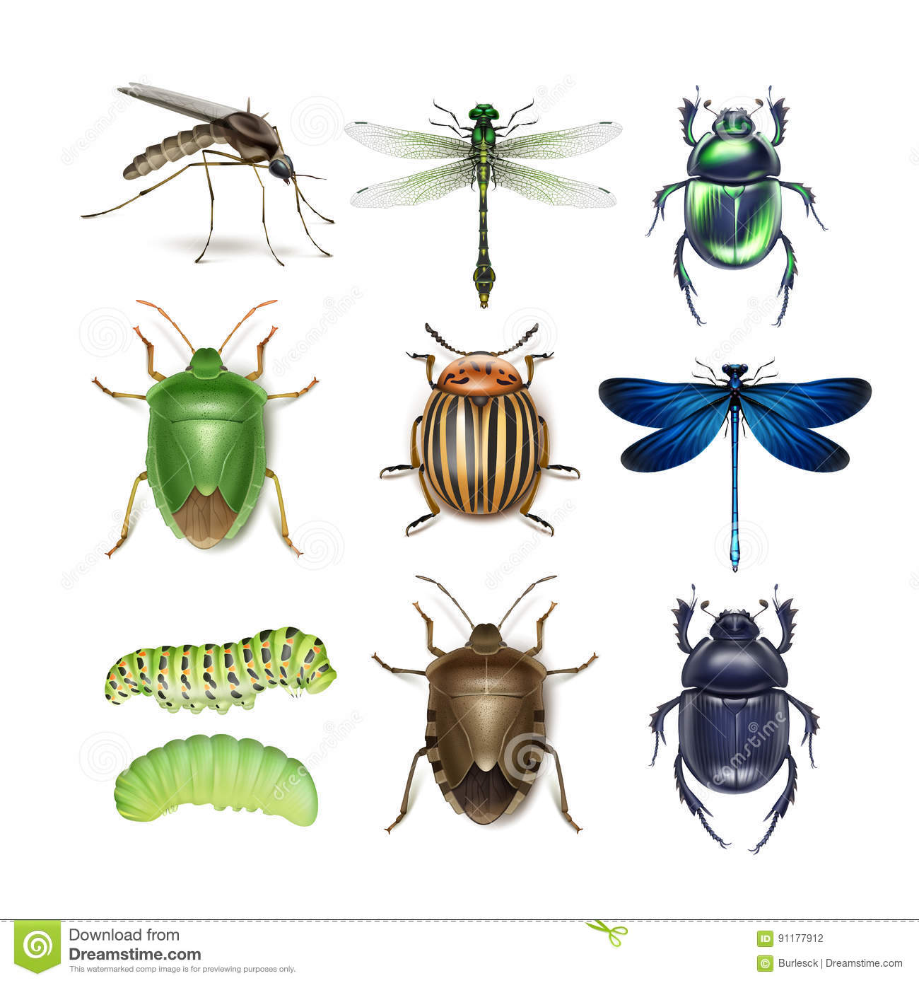 Set of different insects stock vector. Illustration of larvae - 91177912