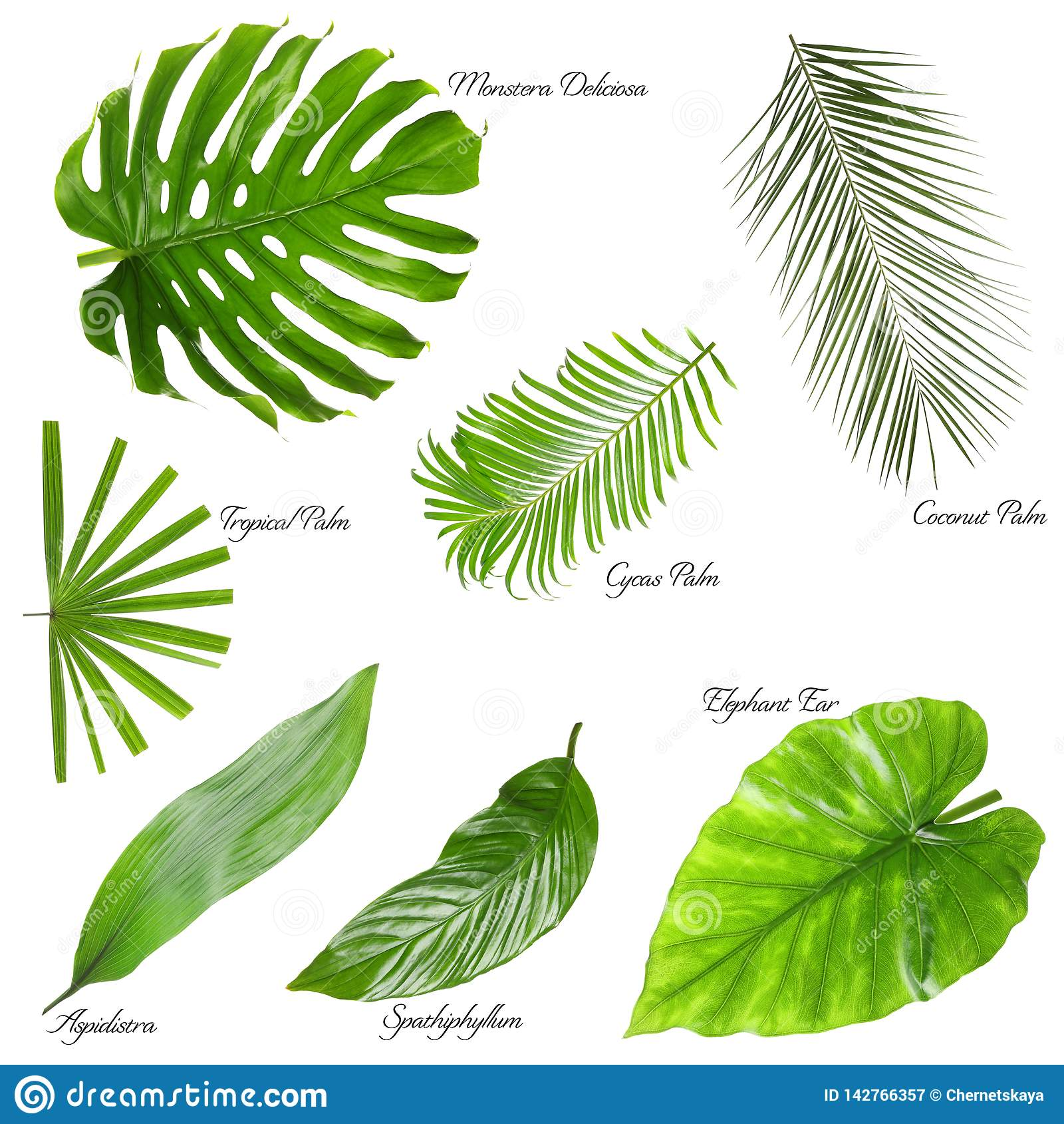 Set Of Different Tropical Leaves On White Stock Image Image Of Abstract Background 142766357 They are home to many resources, but deforestation could result in negative impacts. https www dreamstime com set different tropical leaves white background image142766357