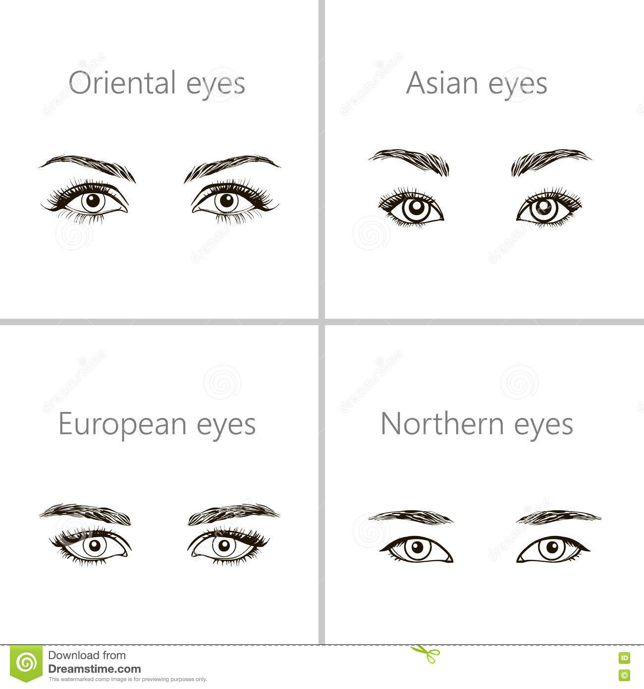 set of different types of eyes stock vector illustration of model