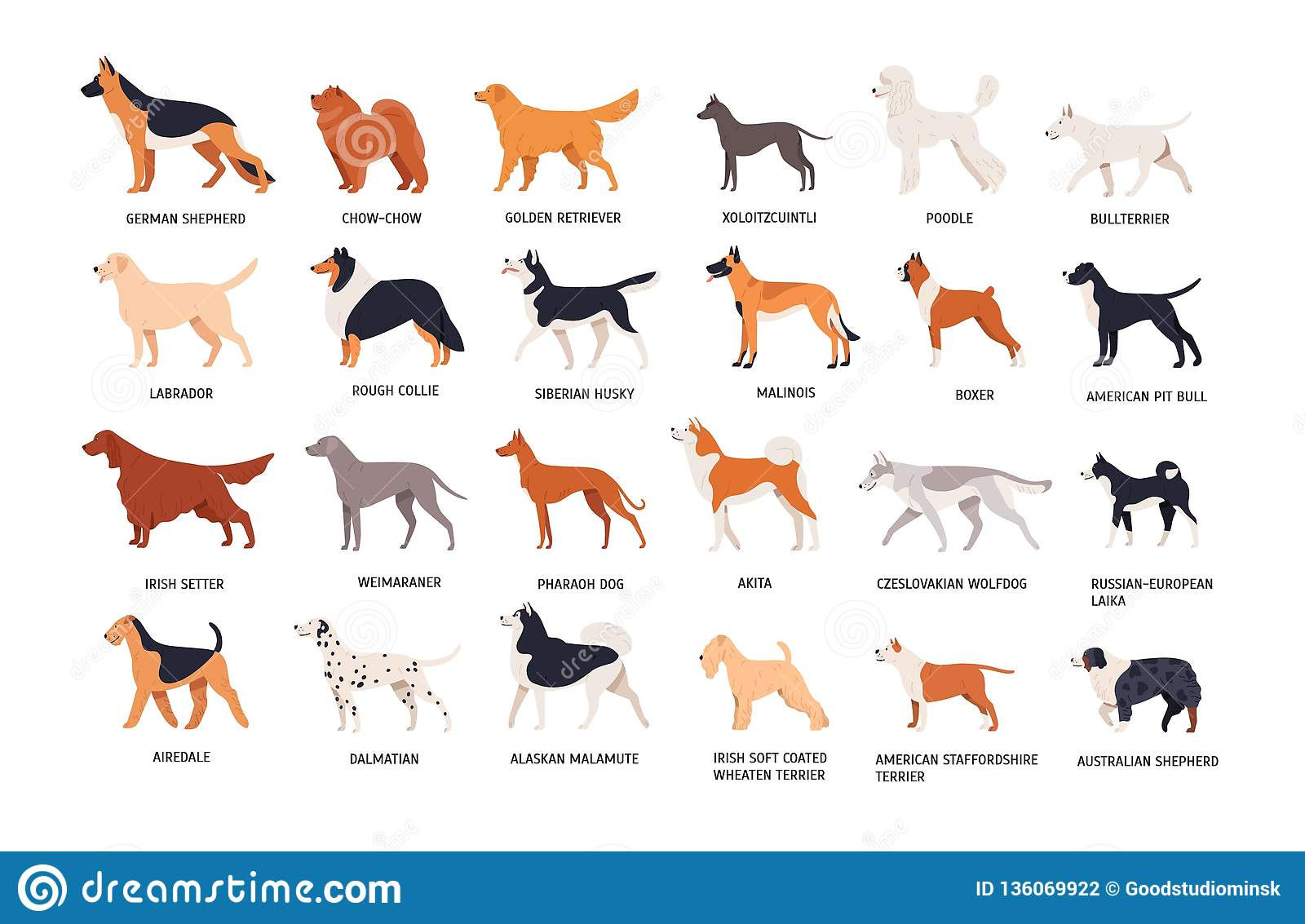 Set Of Dogs Of Different Breeds Isolated On White Background Collection Of Purebred Pets Domestic Animals Or Doggies Stock Vector Illustration Of Husky Adorable 136069922