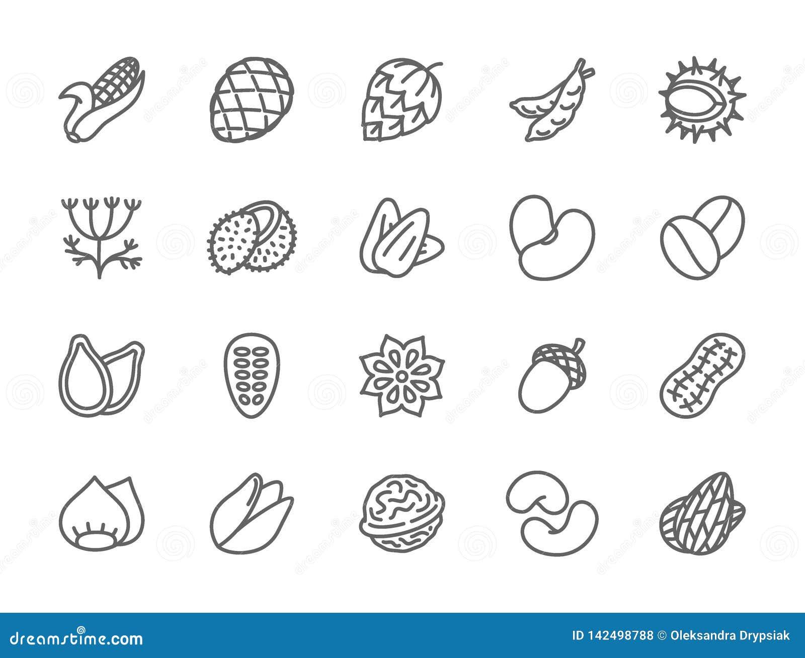 Set dokr?tki, ziarna i warzywa, Wyk?adamy ikony Paczka 48x48 piksla ikony