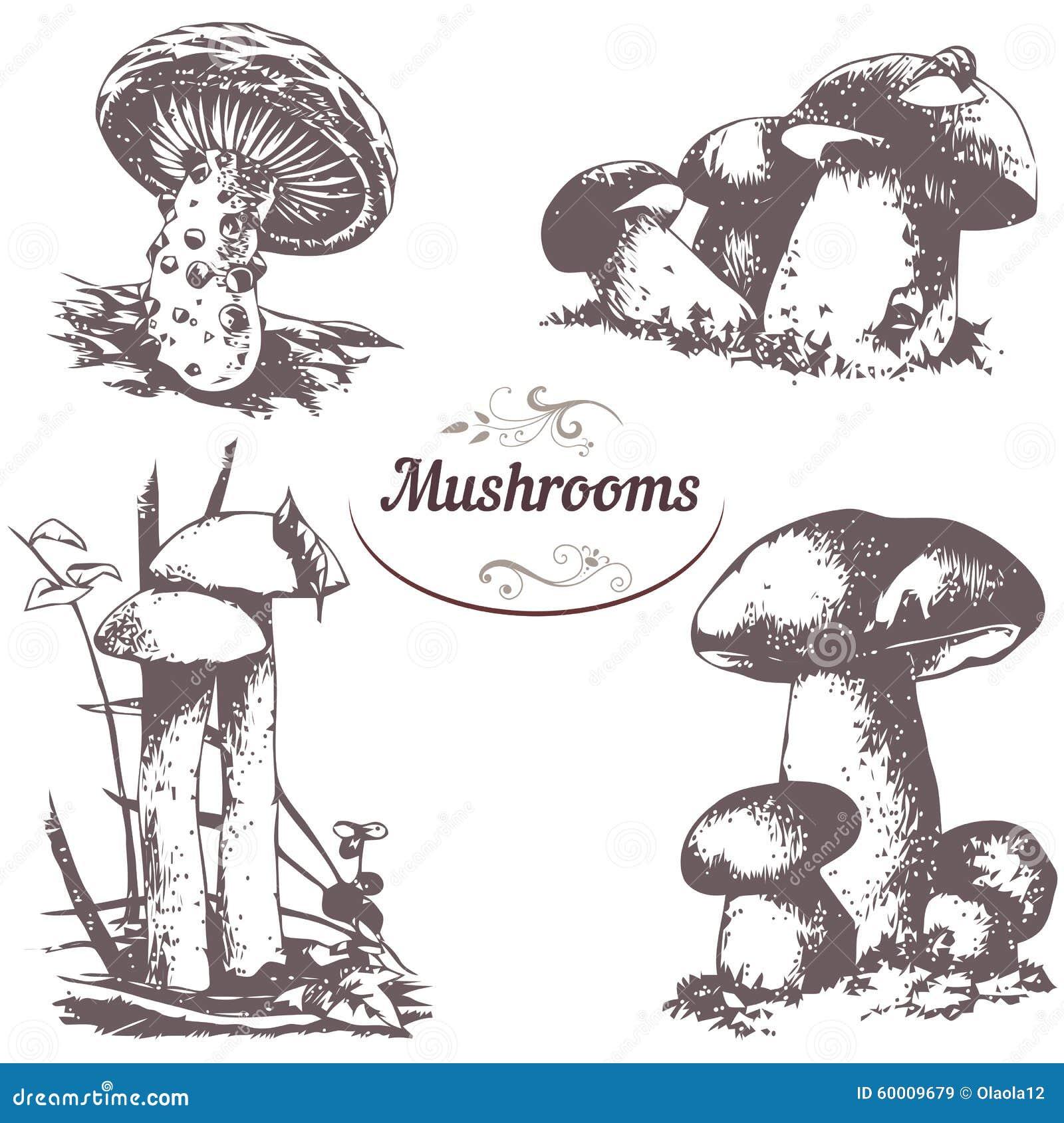 Line Art Software Free Download : Set of drawings mushrooms stock vector image