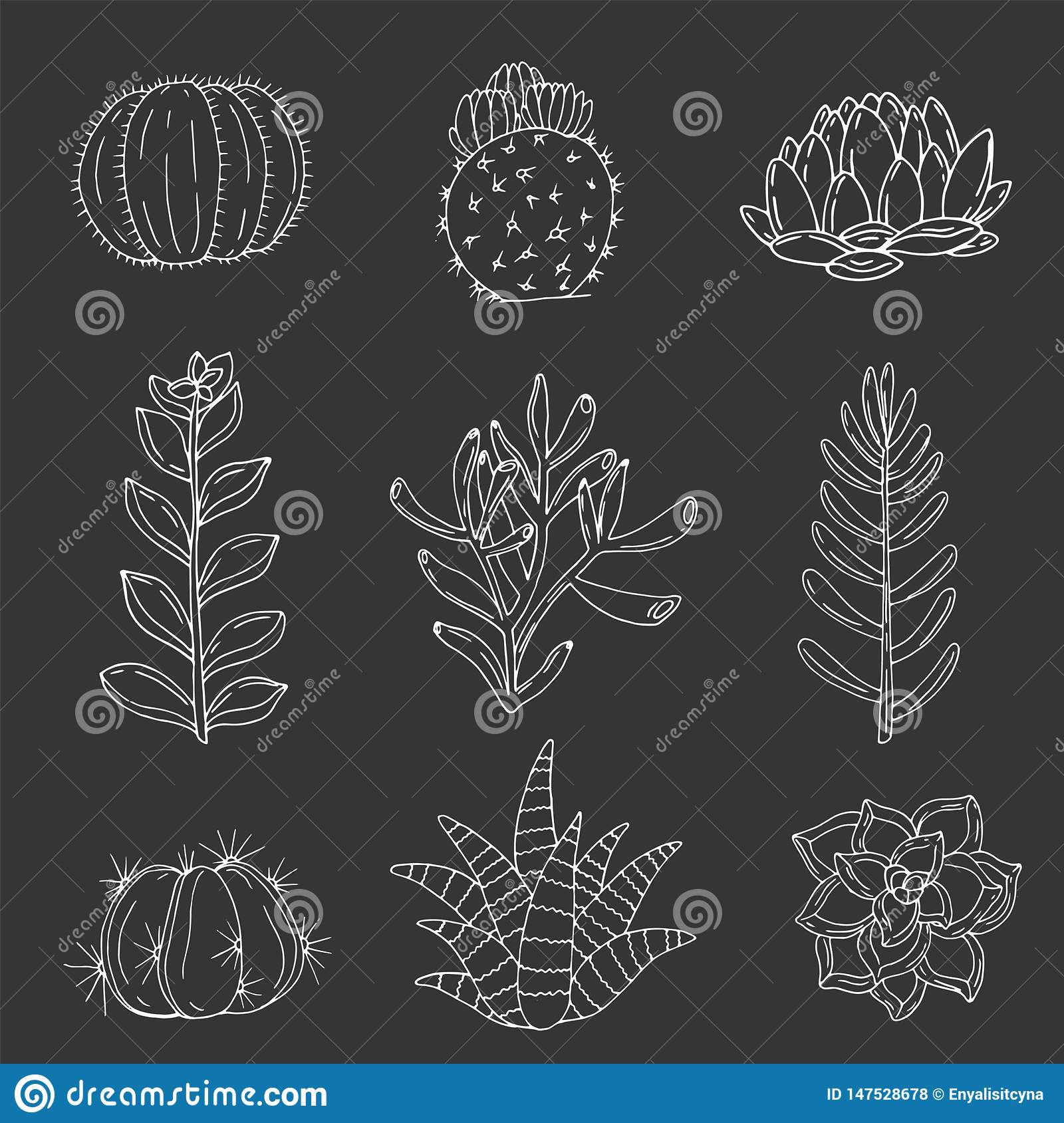 Set Of Elements With Hand Drawn Cacti And Succulents On A Chalkboard Background Stock Vector Illustration Of Botanic Black 147528678