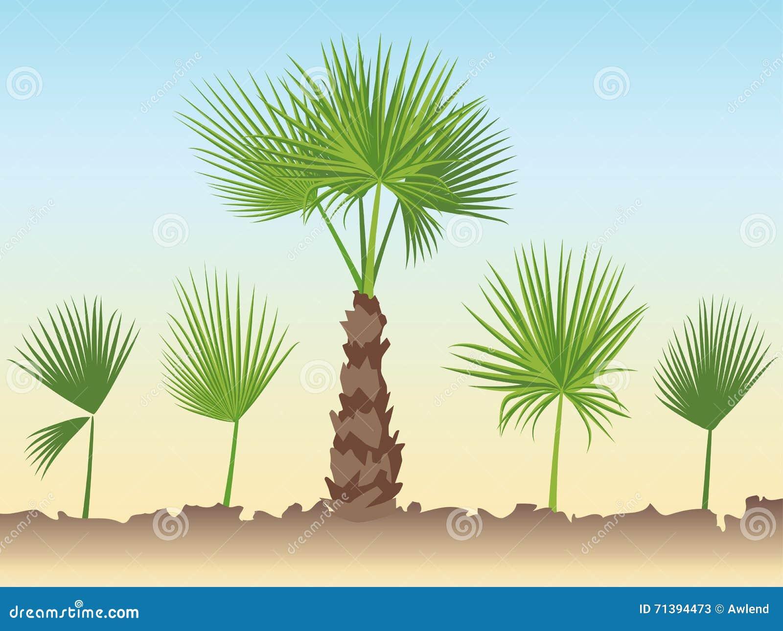 Set Of Fan Palm Round Leaves. Fan Palm Tree Stock Vector ...