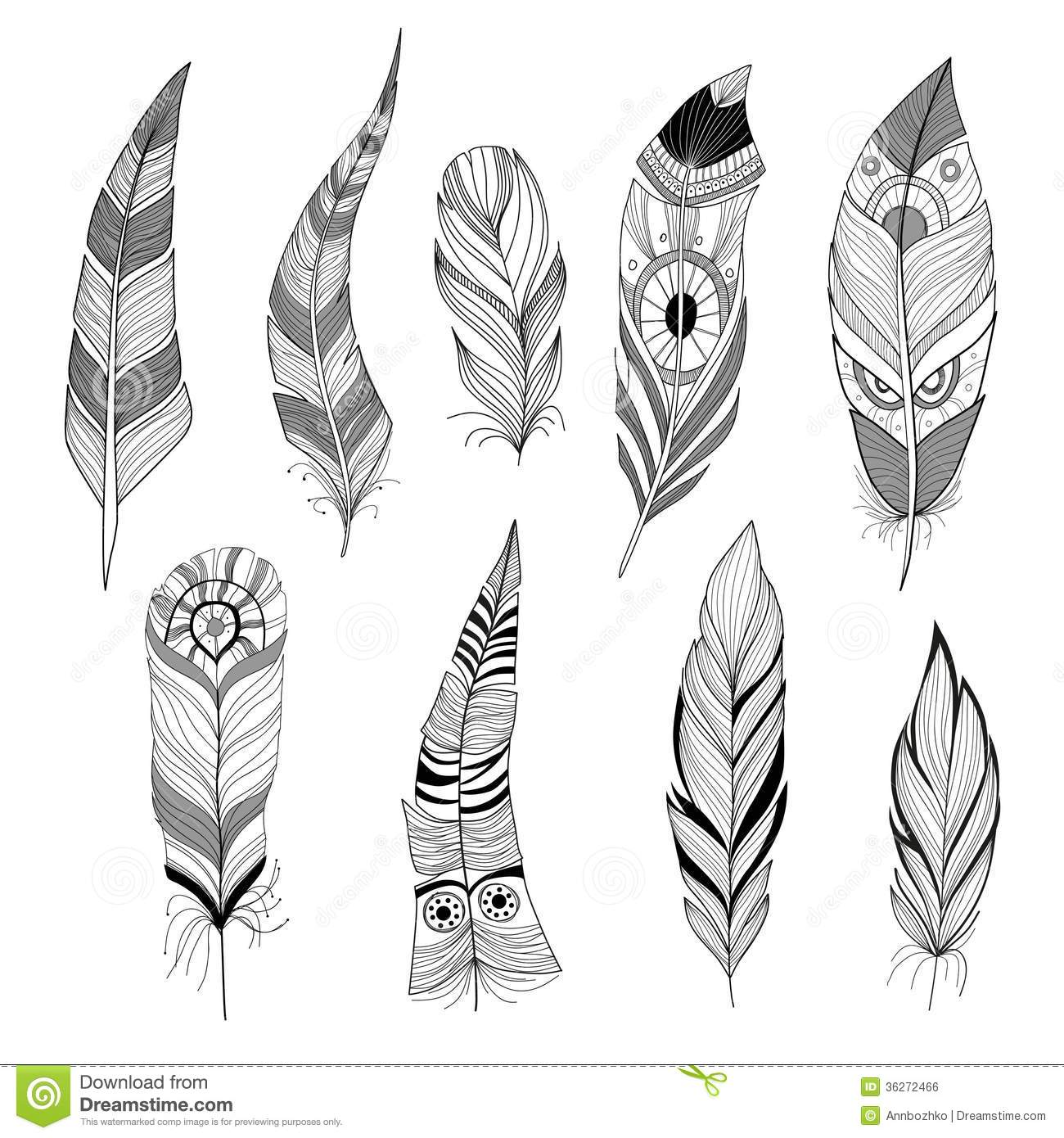 Set of feathers stock vector. Illustration of feathers ...