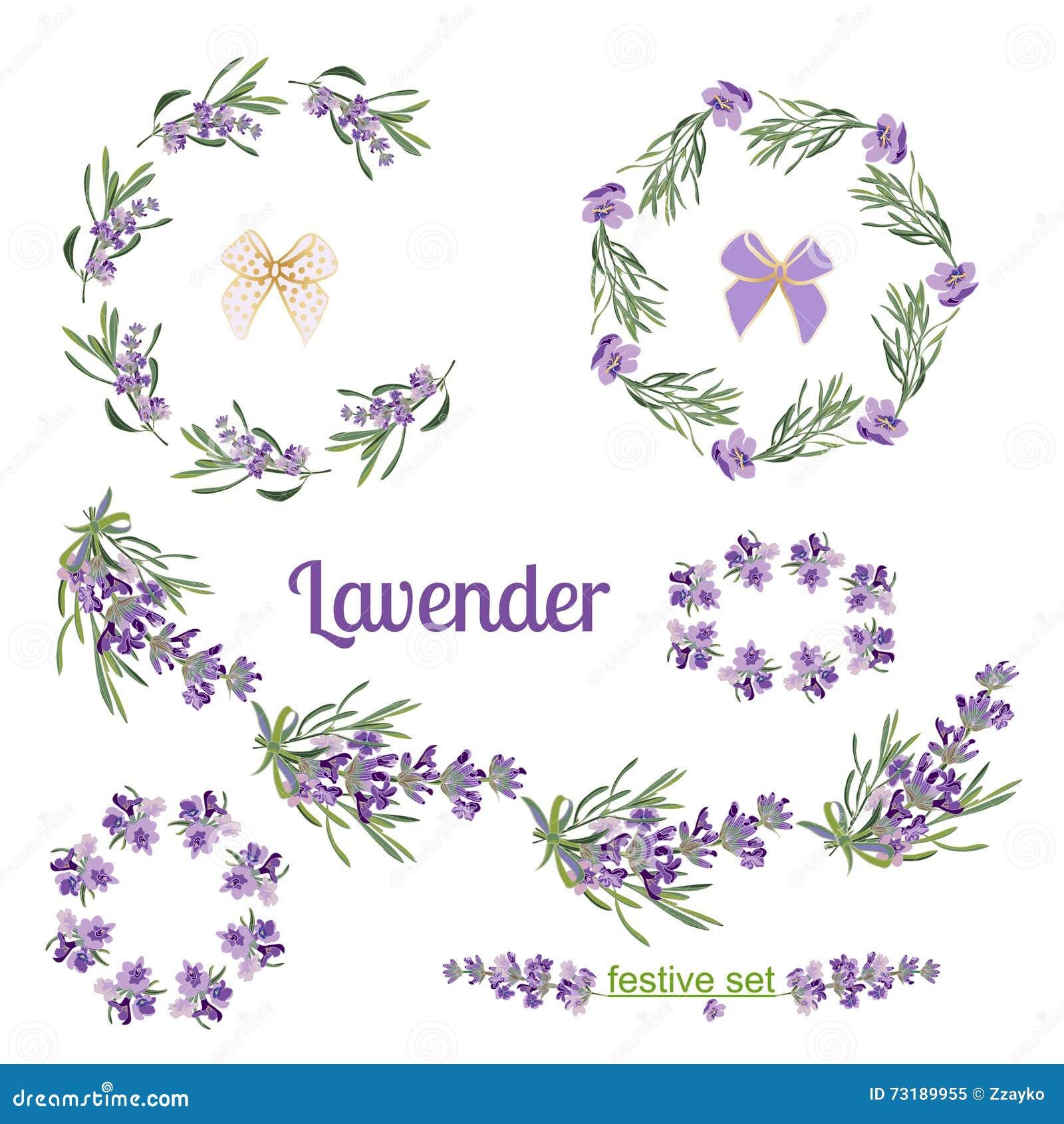 Lavender Flowers Elements Botanical Illustration Royalty