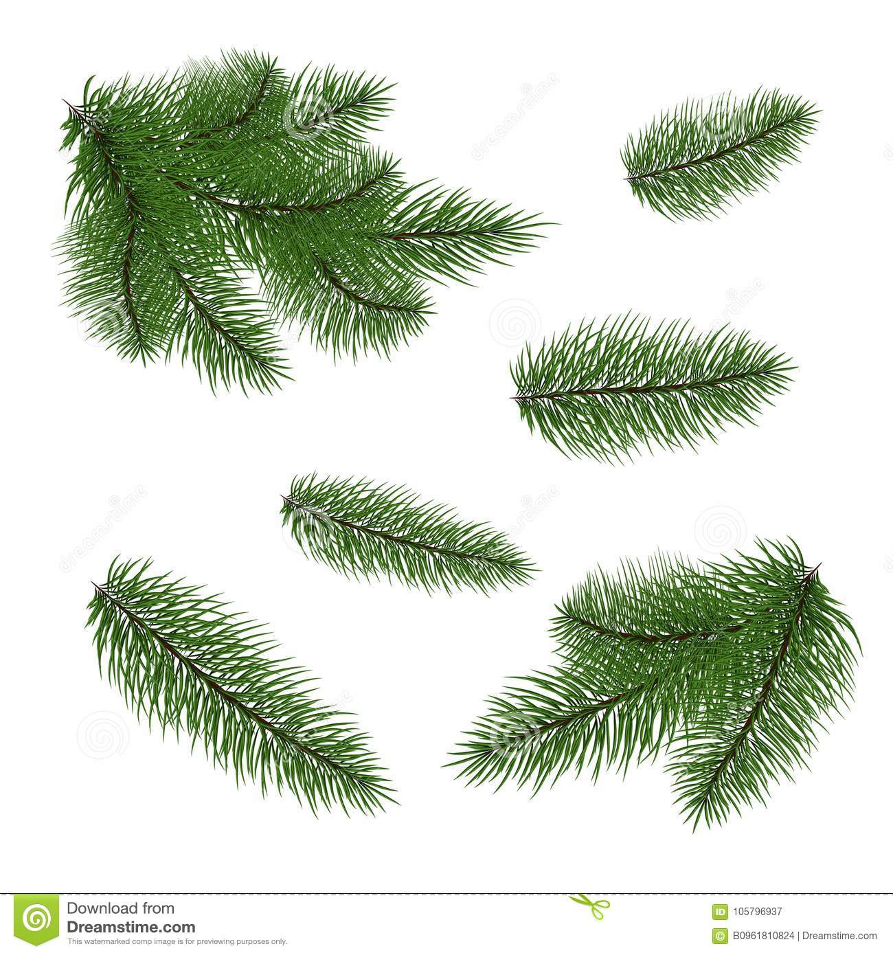Set Fir Branches Fir Tree Branches For Decoration Drawing Is