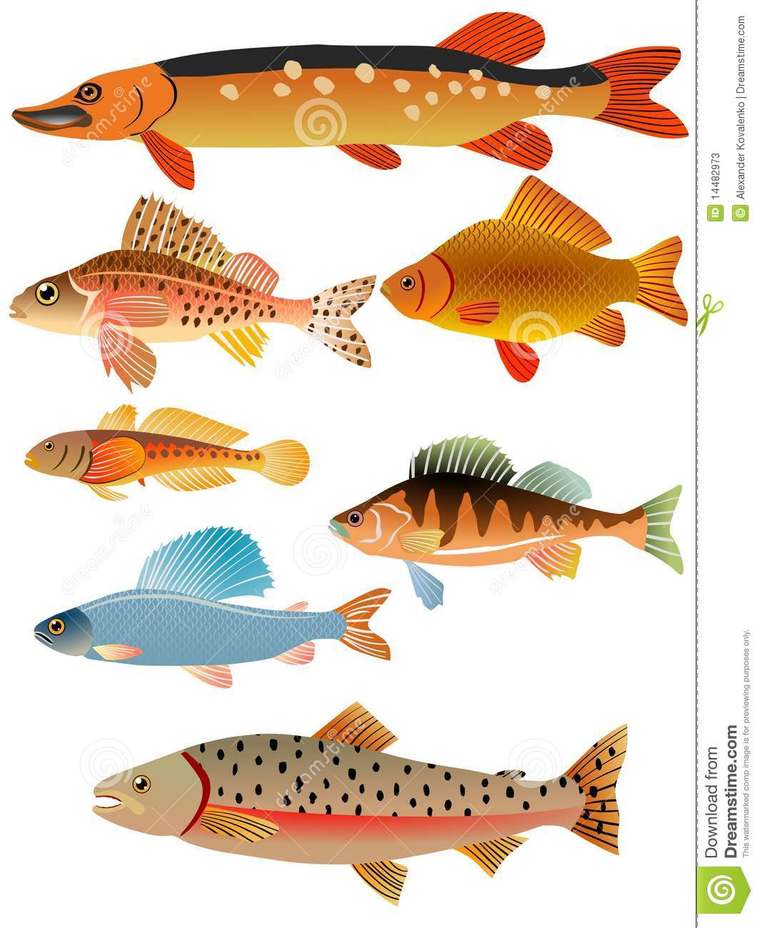 Set of fishes stock photos image 14482973 for 7 fishes list