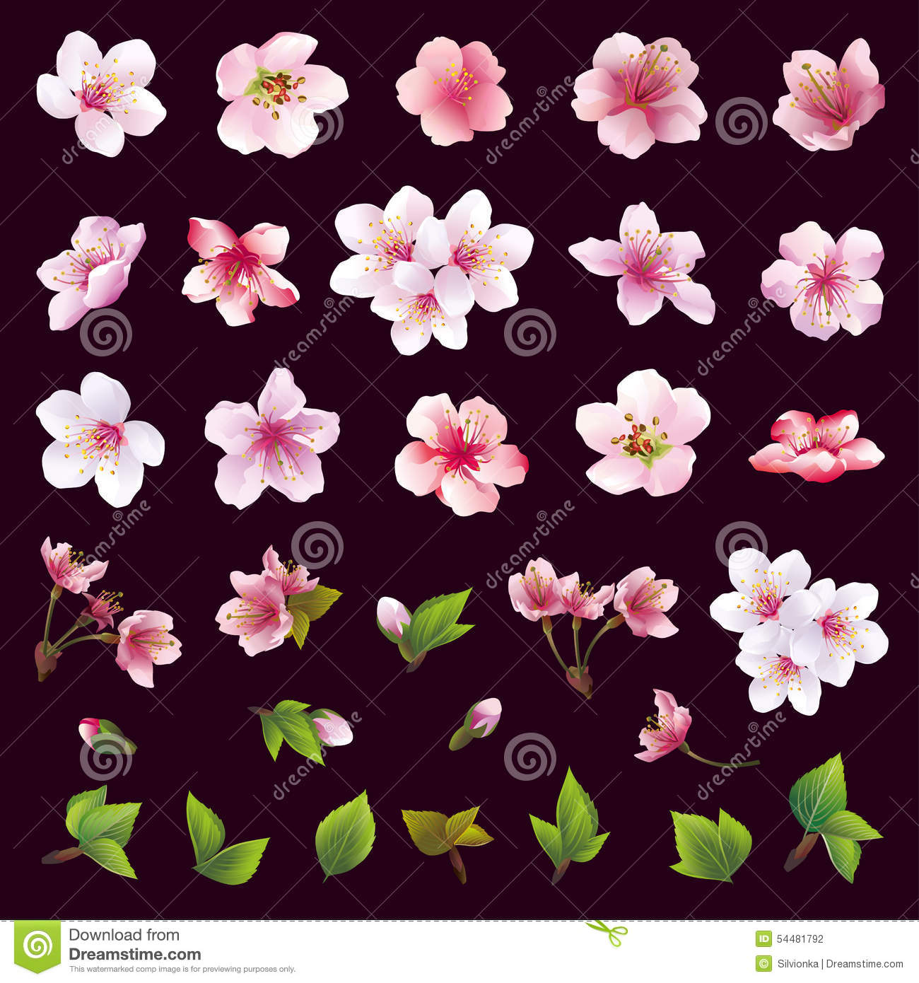 Set of flowers of cherry tree and leaves stock vector illustration big set of different beautiful cherry tree flowers and leaves on black background collection of white pink purple sakura blossom japanese cherry tree mightylinksfo