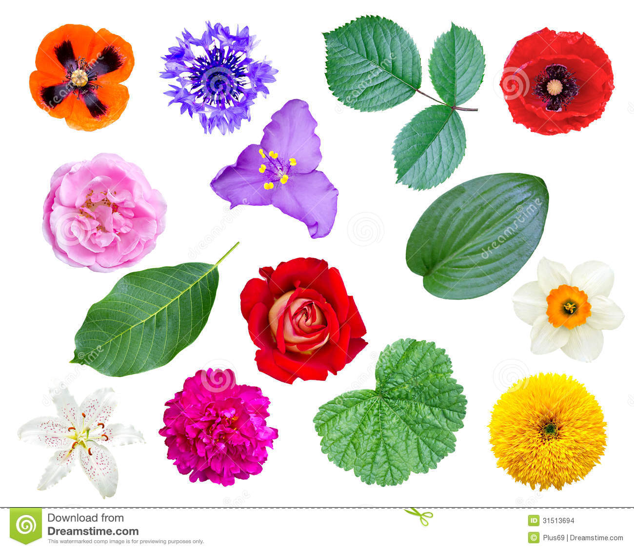 Set Of Flowers And Leaves Stock Images - Image: 31513694