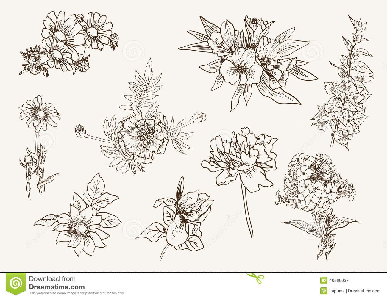 Set Of Flowers Stock Vector Image 40569037