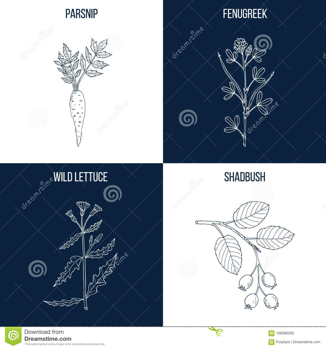 Set of four hand drawn eatable and medicinal plants stock vector download set of four hand drawn eatable and medicinal plants stock vector illustration of health ccuart Image collections