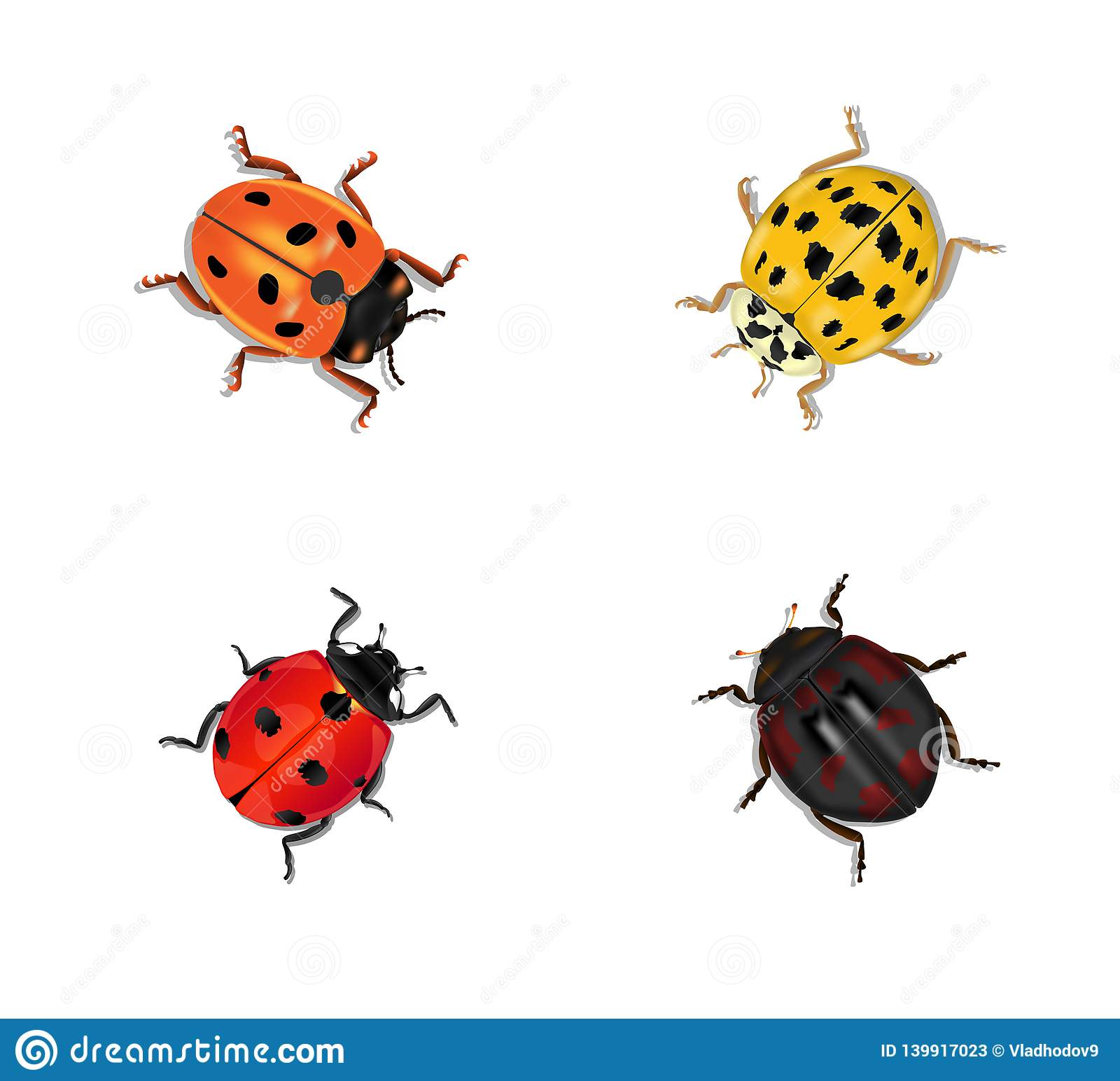 Set Of Four Ladybugs Of Different Colors And Shapes Stock ...