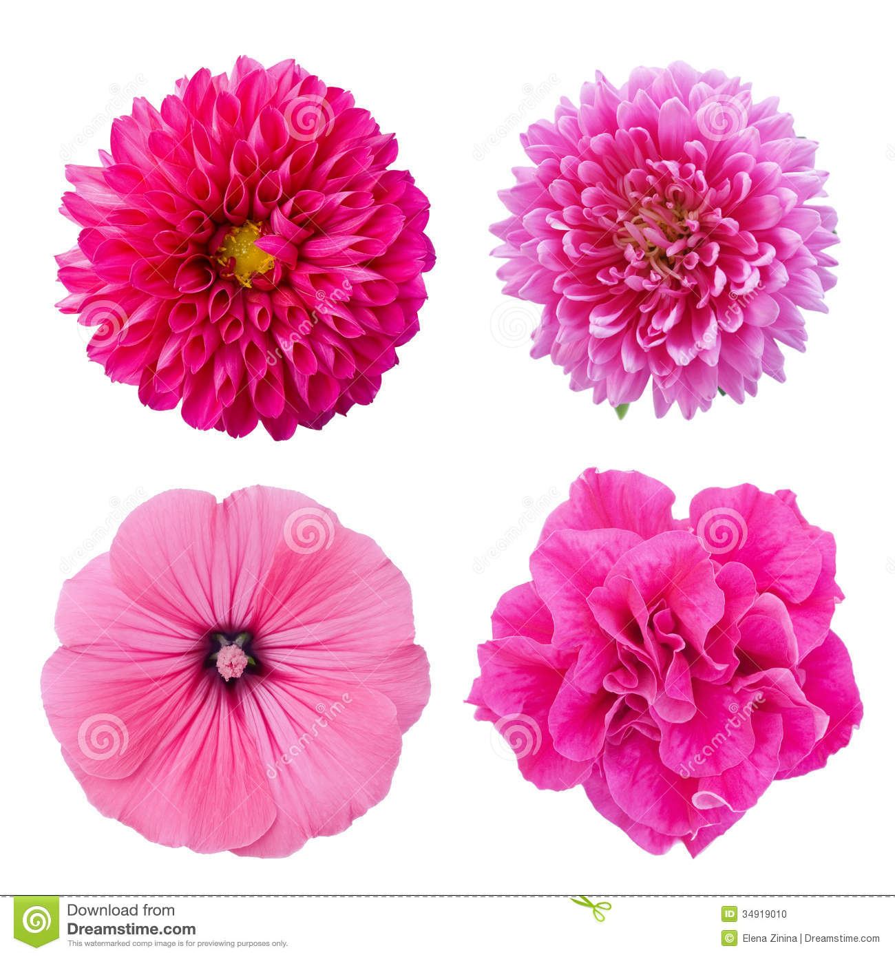 set four pink flowers isolated on white background stock photo, Natural flower