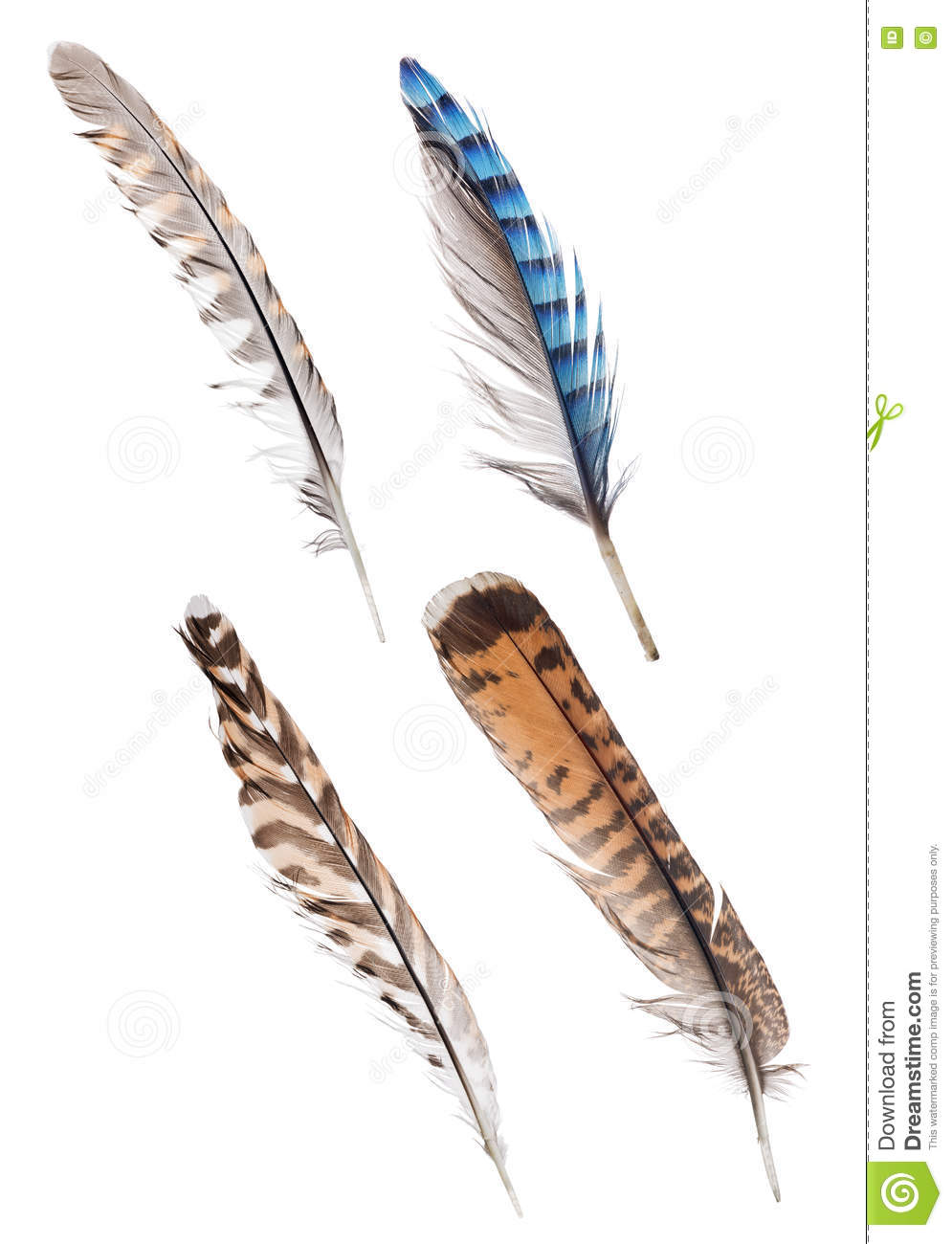 set of four striped forest birds feathers stock photo image of