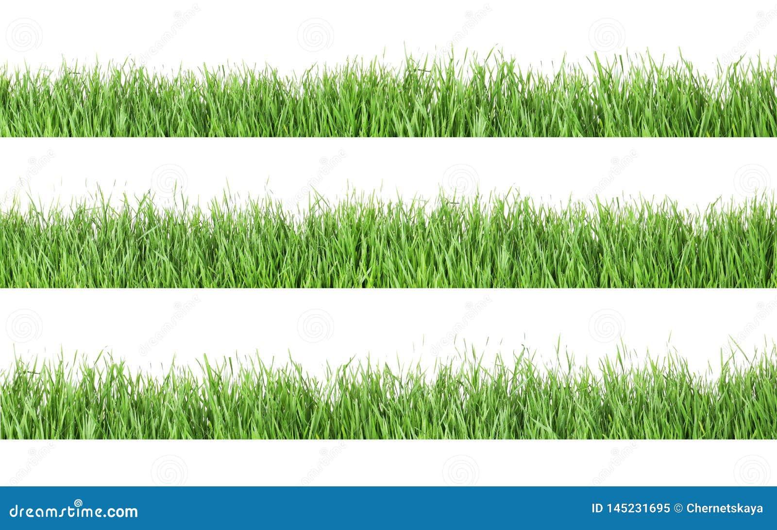 Set of fresh green grass on white