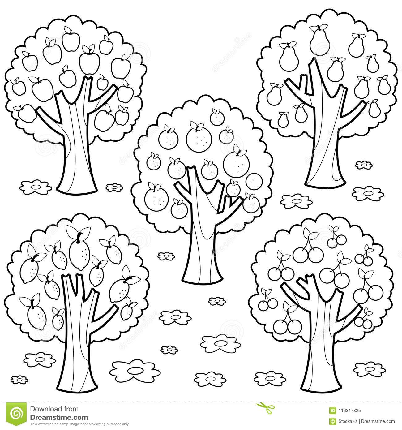 77 Coloring Book Tree Images Picture HD