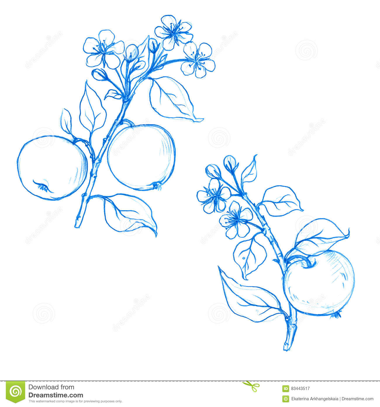 Set Of Fruit Tree Branches With Flowers Leaves And Apples Stock