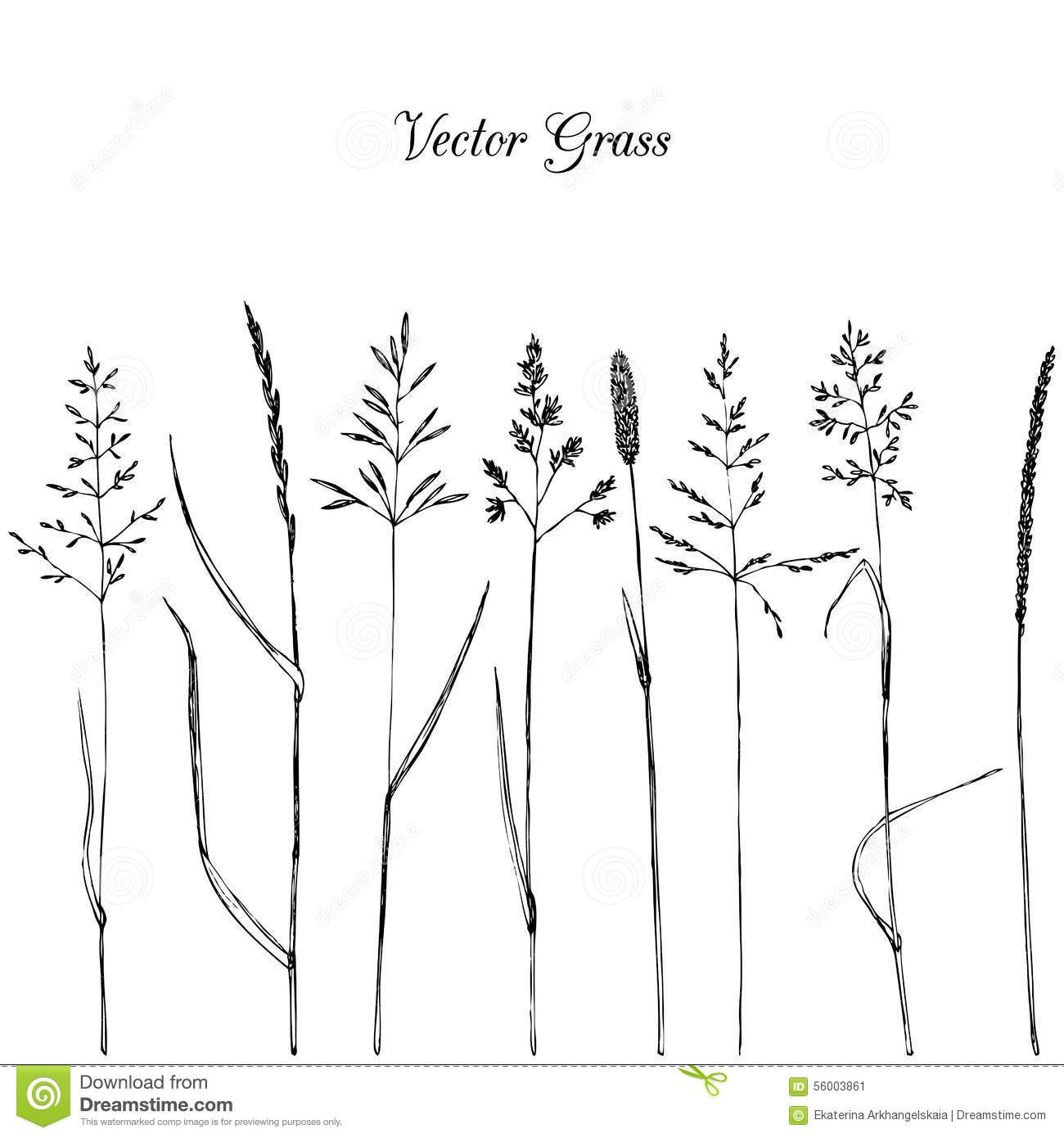 Line Drawing Grass : Set of grass silhouettes stock vector image