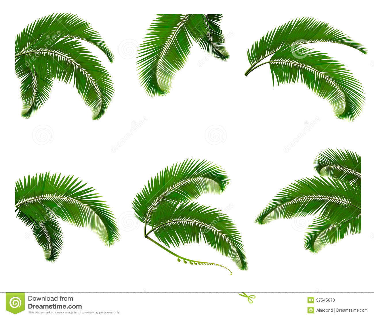 Set Green Branches With Leaves Of Palm Trees Stock Photo ...