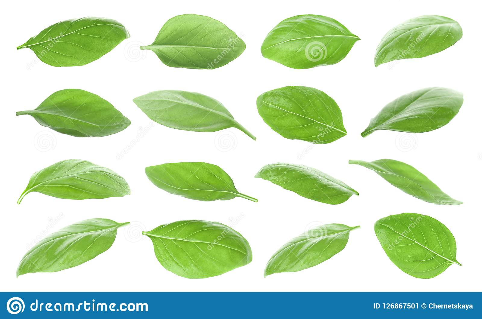 Set with green fresh basil leaves
