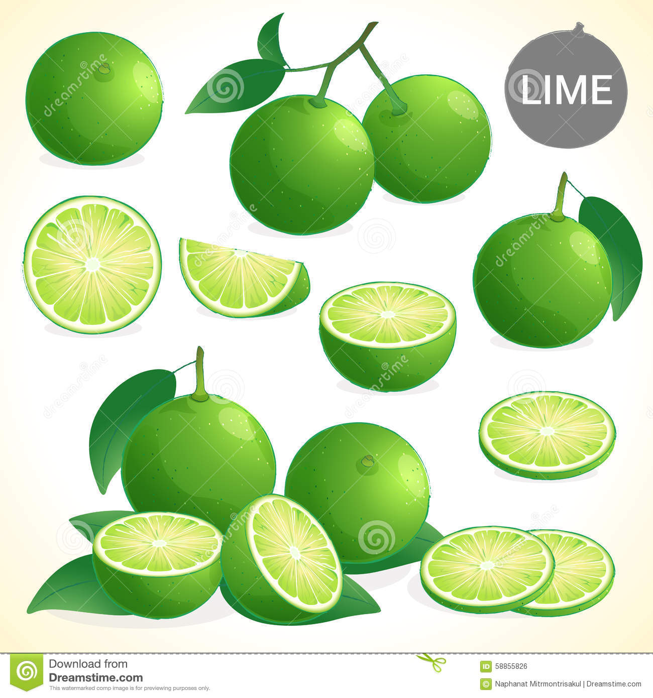 Set of green lime in various styles vector format