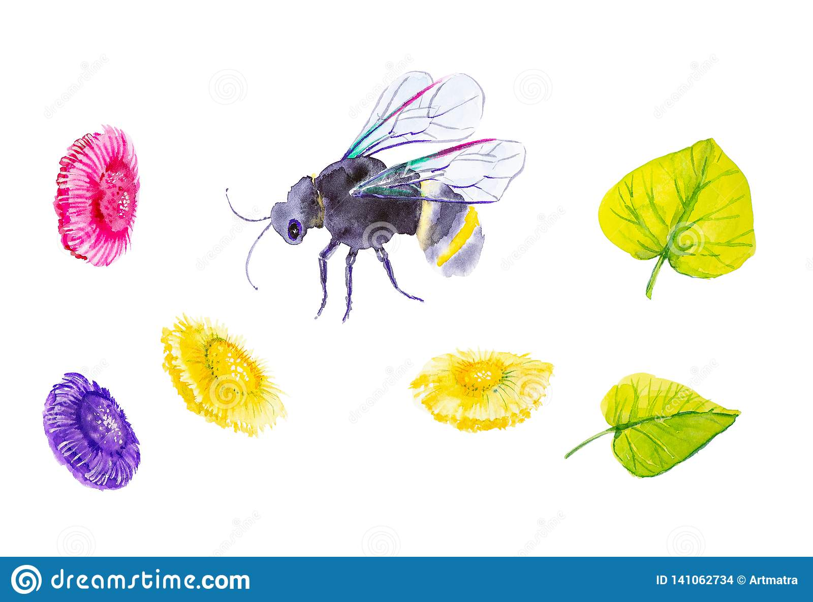 Set of ground bumblebee, daisies and green leaves. Watercolor illustration isolated on white background