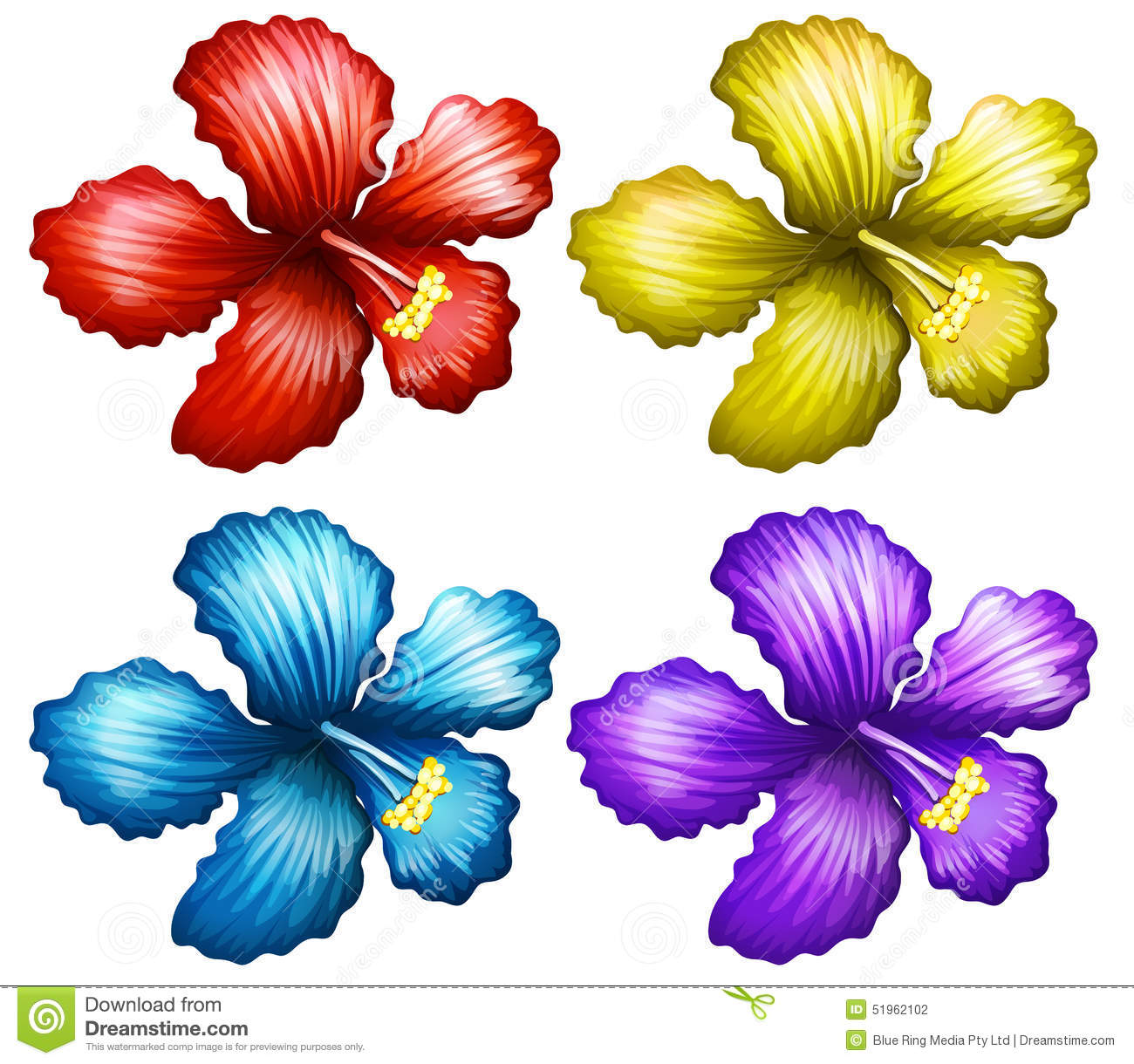 Set Of Gumamela Flowers Stock Vector