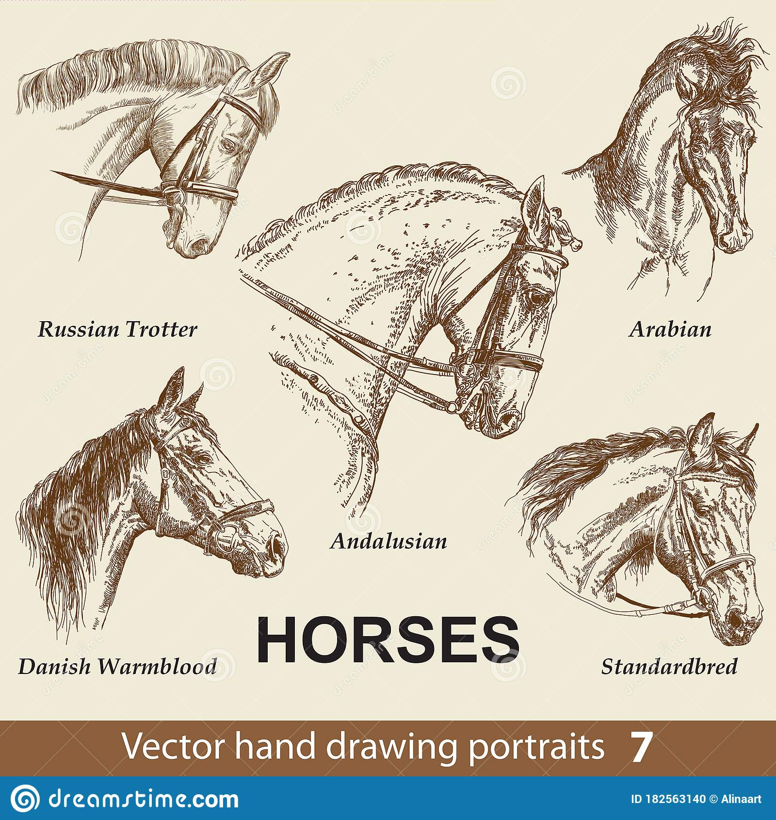 Set Of Hand Drawing Horses 7 Stock Vector Illustration Of Element Head 182563140