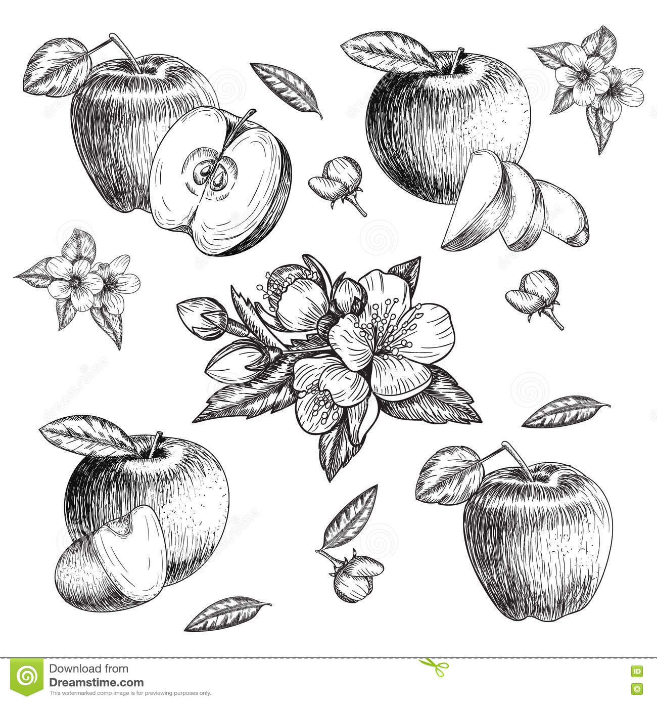 Apple With Apple Slice Illustration Hand Drawn Apple Fruit Sketch Royalty-Free Illustration ...