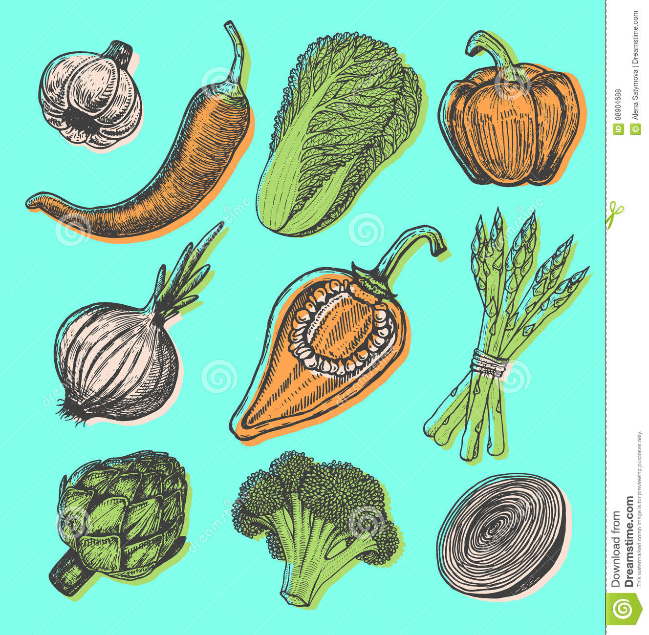 hand drawn of leafy and salad vegetable cartoon vector