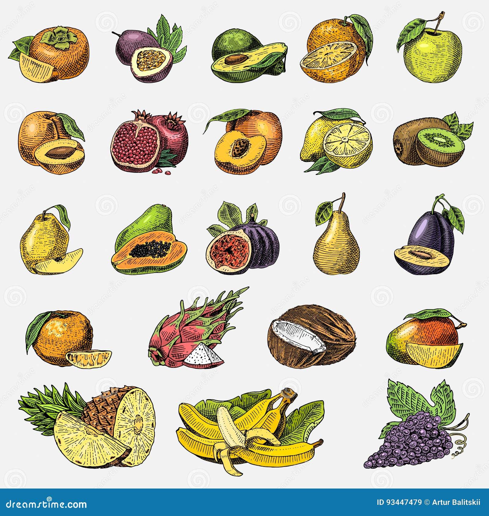 Set of hand drawn, engraved fresh fruits, vegetarian food, plants, vintage orange and apple, grape with coconut