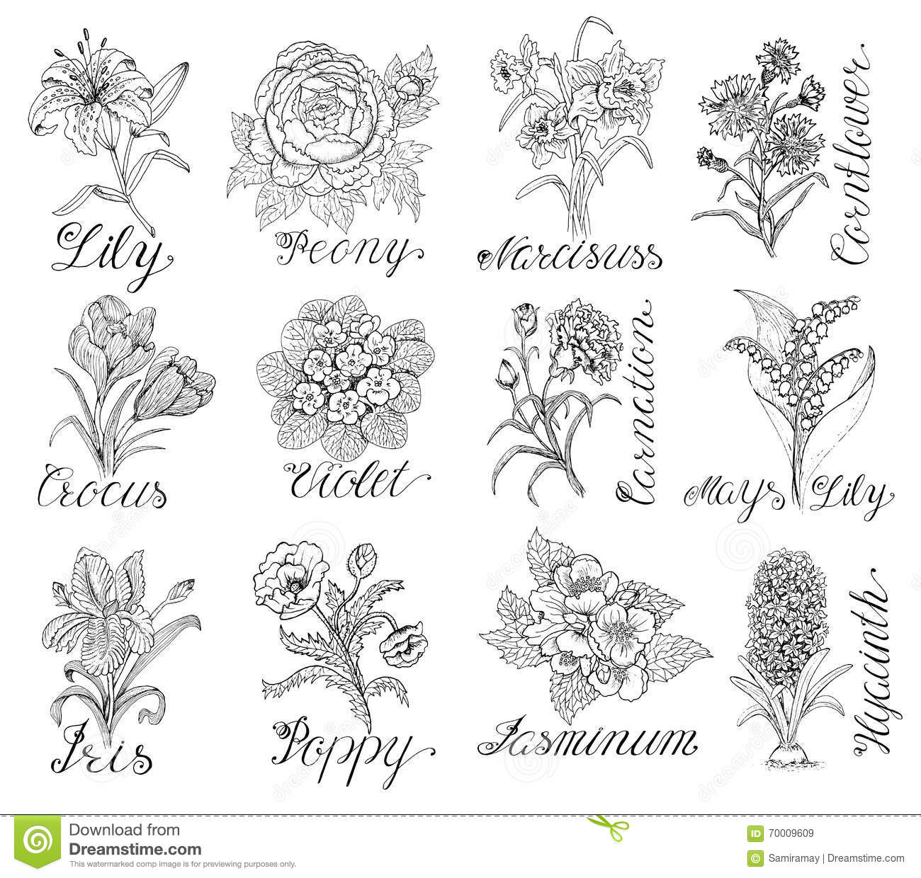 Set of hand drawn flowers with calligraphy lettering stock